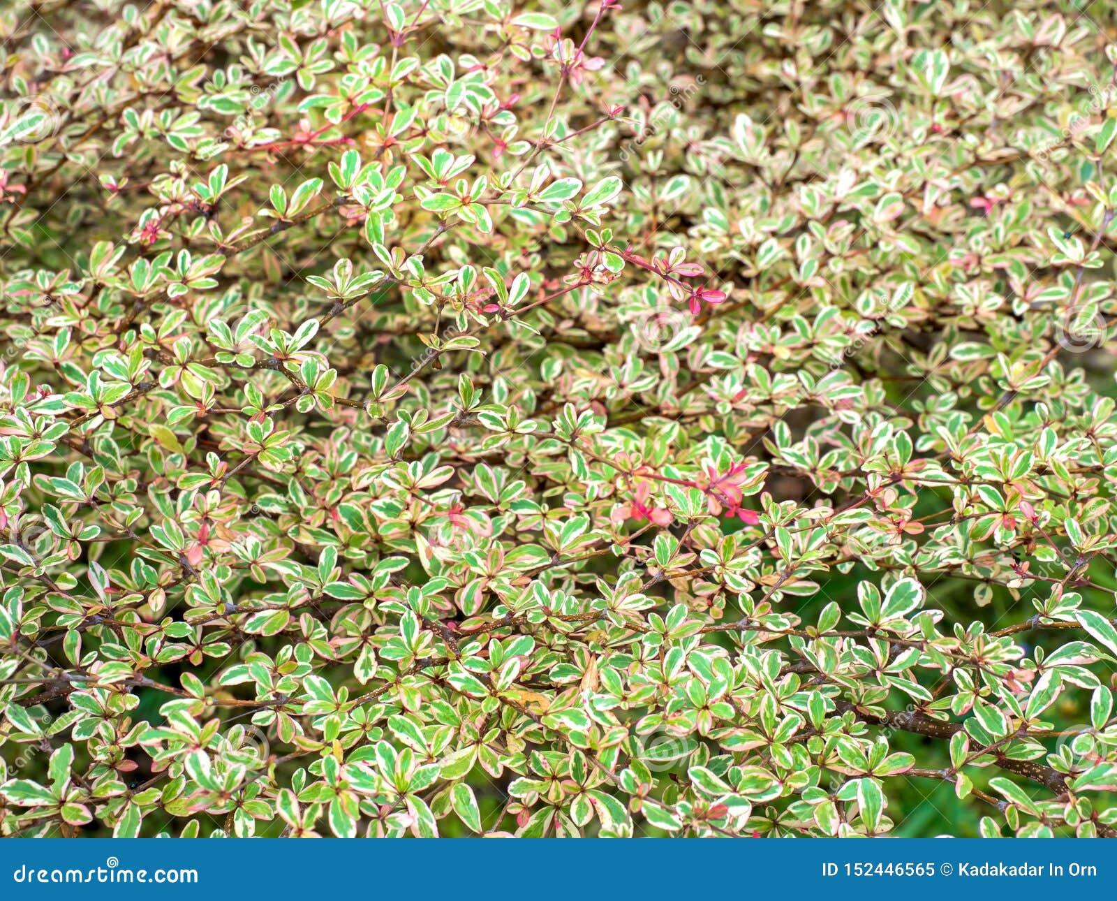 Hintergrund von Blättern, der schöne 02 ist