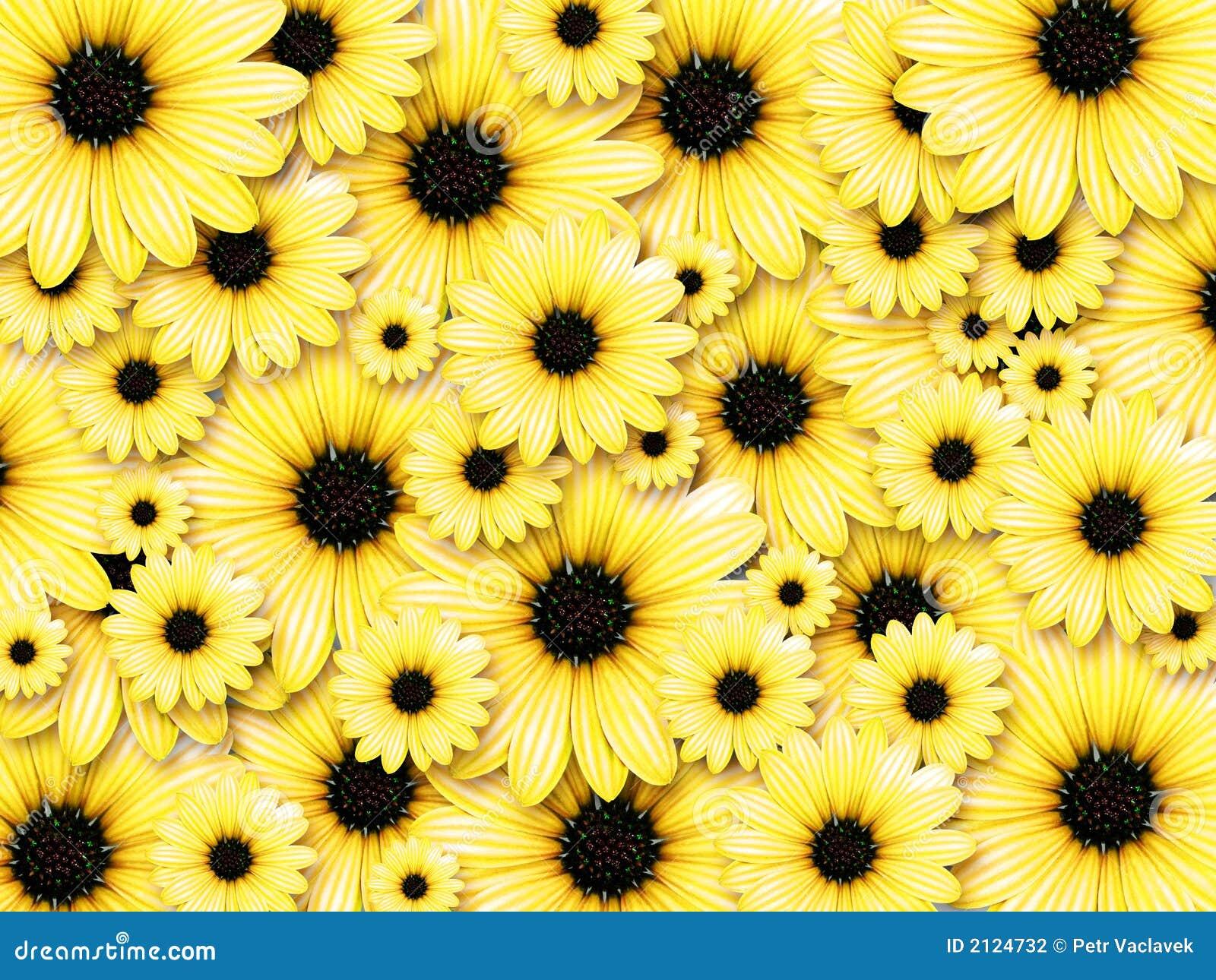 Hintergrund von den gelben Blumen