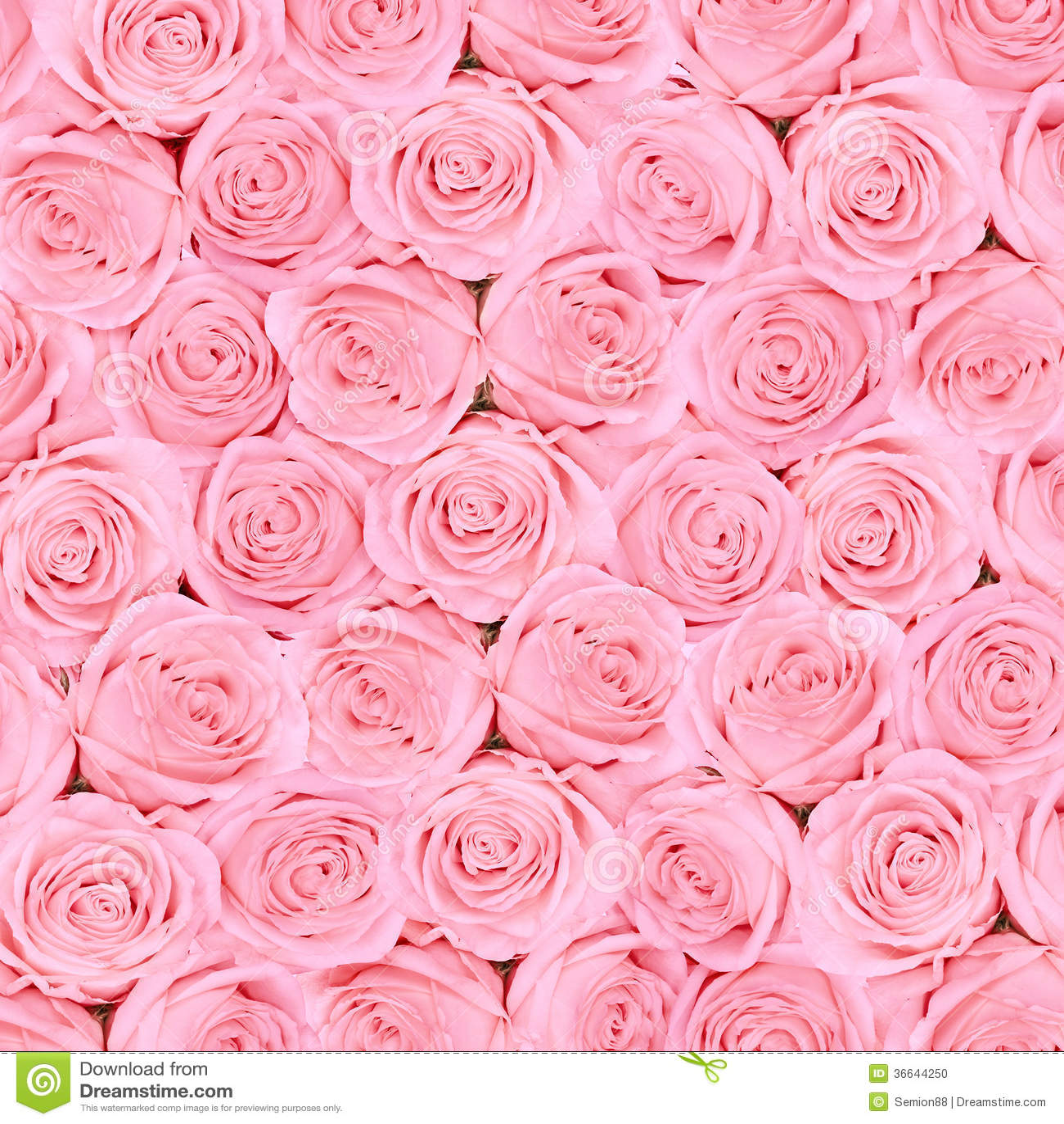 hintergrund von rosa hellen sch nen rosen stockfoto bild von sch n floral 36644250. Black Bedroom Furniture Sets. Home Design Ideas