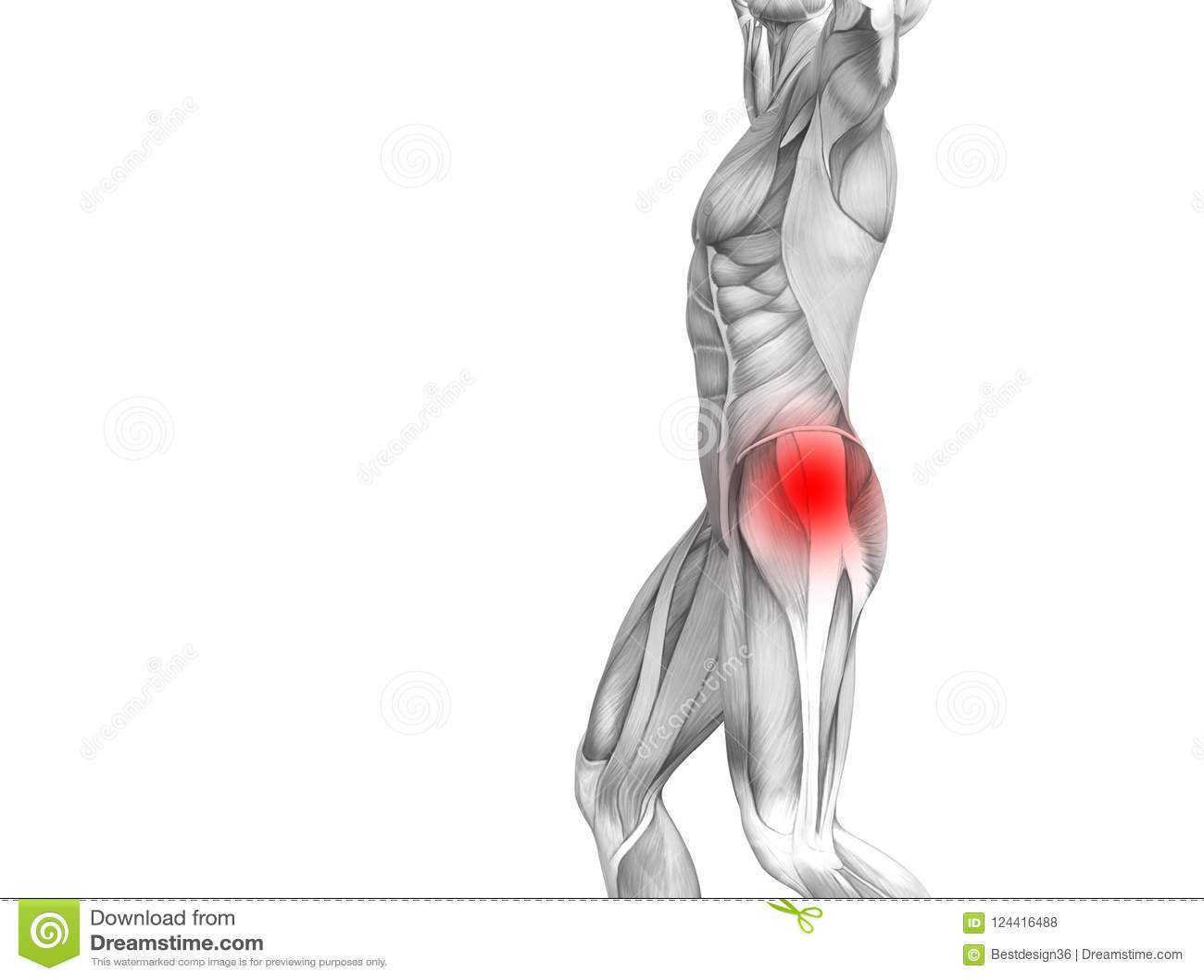 Hip Human Anatomy Hot Spot Inflammation Articular Joint Stock