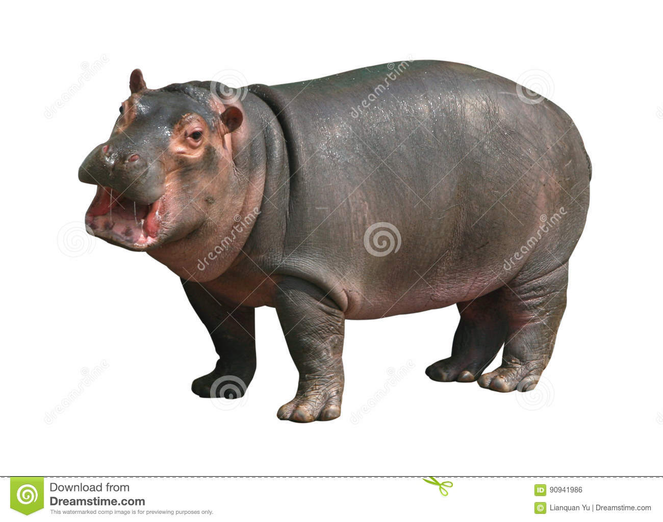 Hippo Baby On White Background Royalty Free Stock Photo
