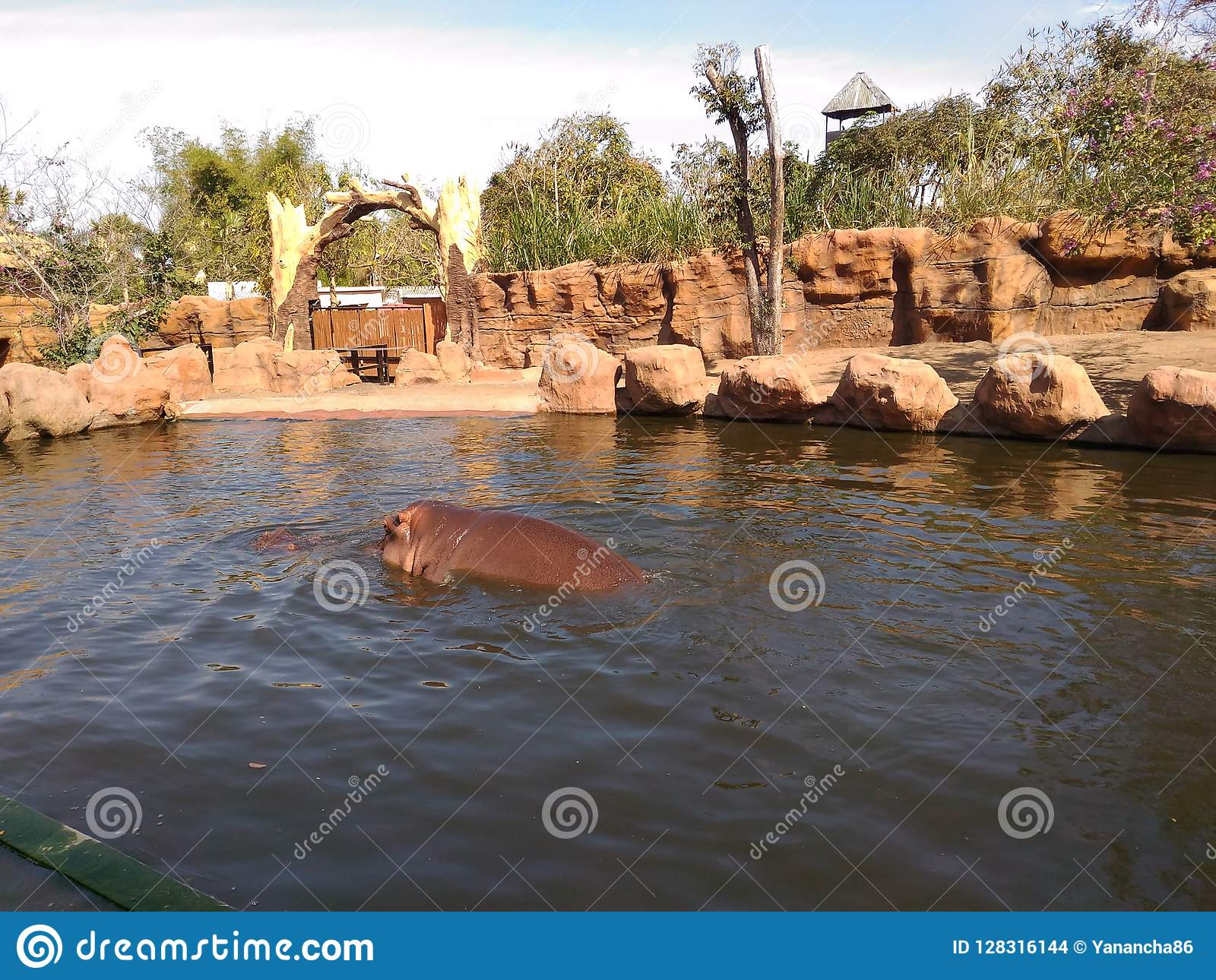 Hippo Stock Photo Image Of Secret Malang Batu Hippo 128316144