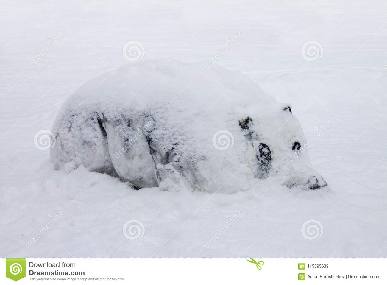 Hippo in snow during cold winter.