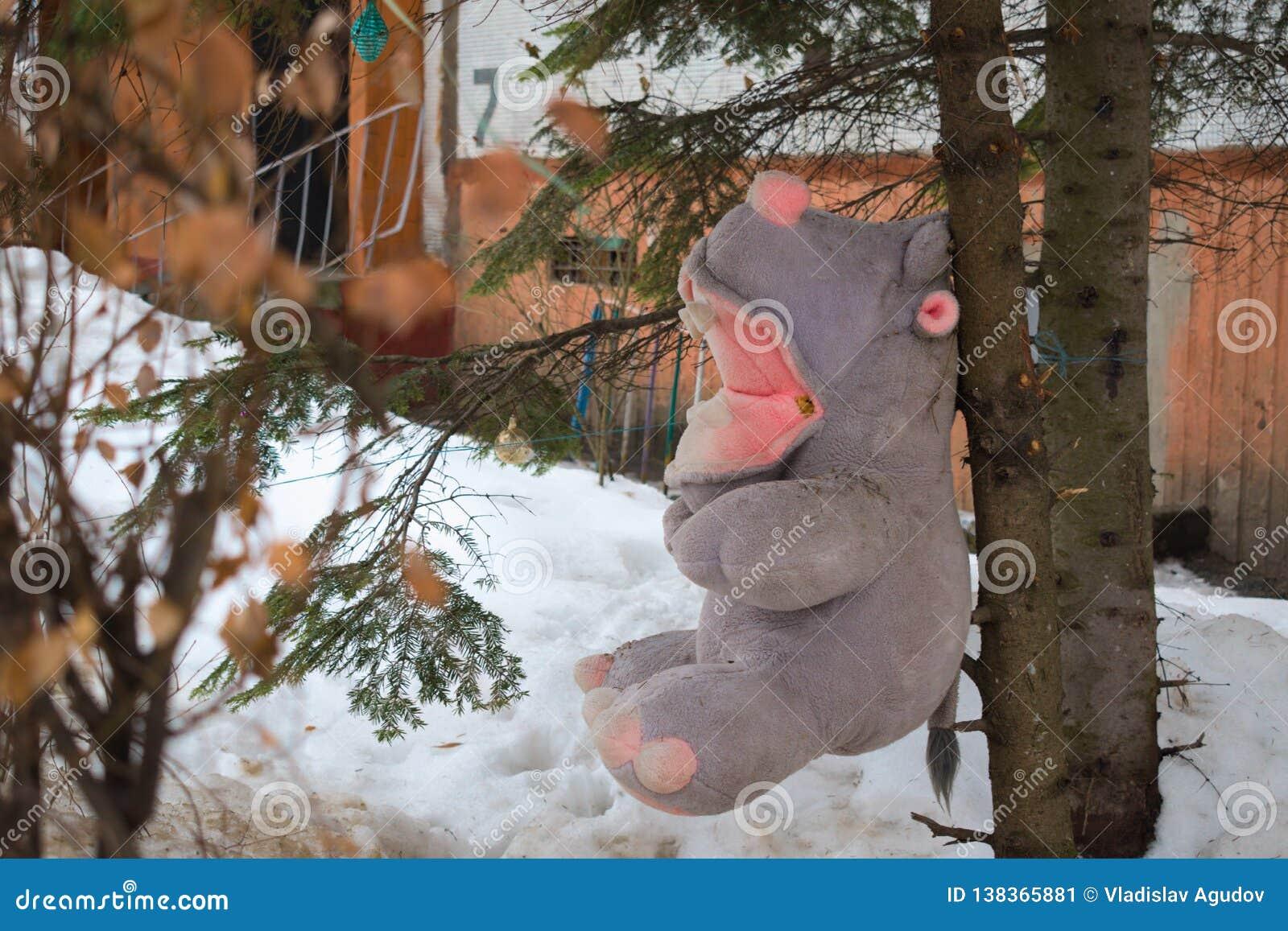 Hippo Teddy που καρφώνεται στις ερυθρελάτες