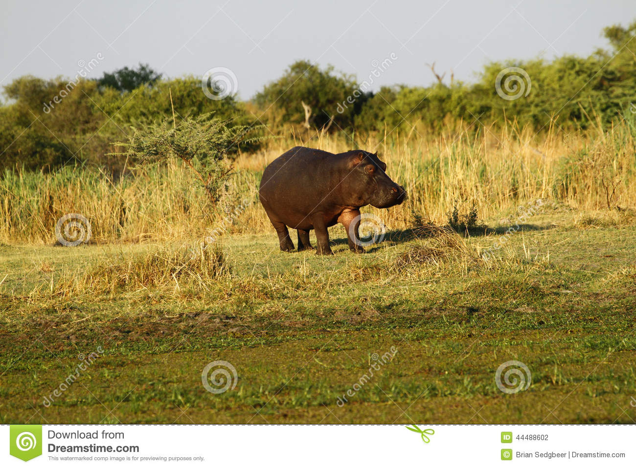 Hippo Too close for comfort