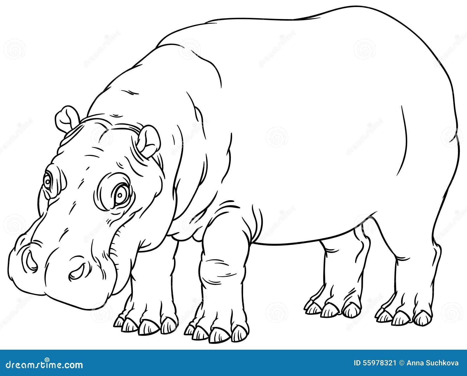 Line Art Hippo : Hippopotamus amphibius or river horse stock vector image