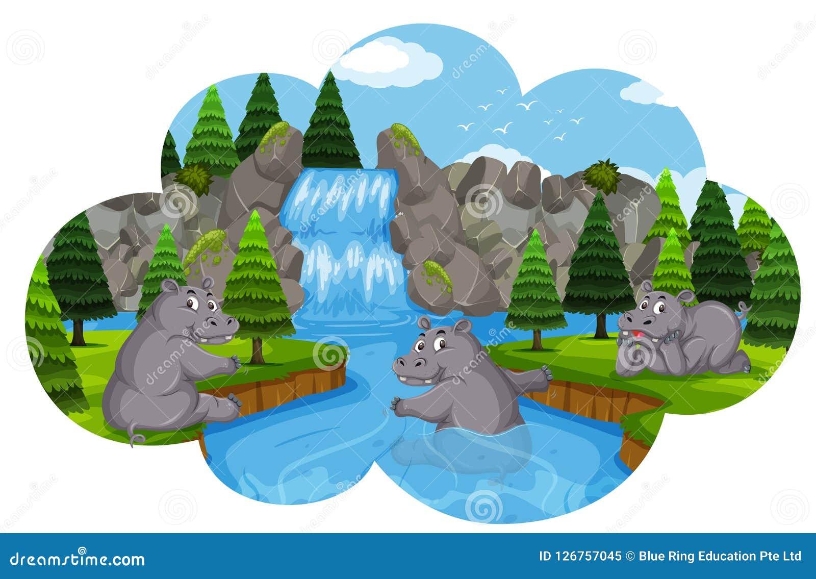 Hippos het spelen in waterval