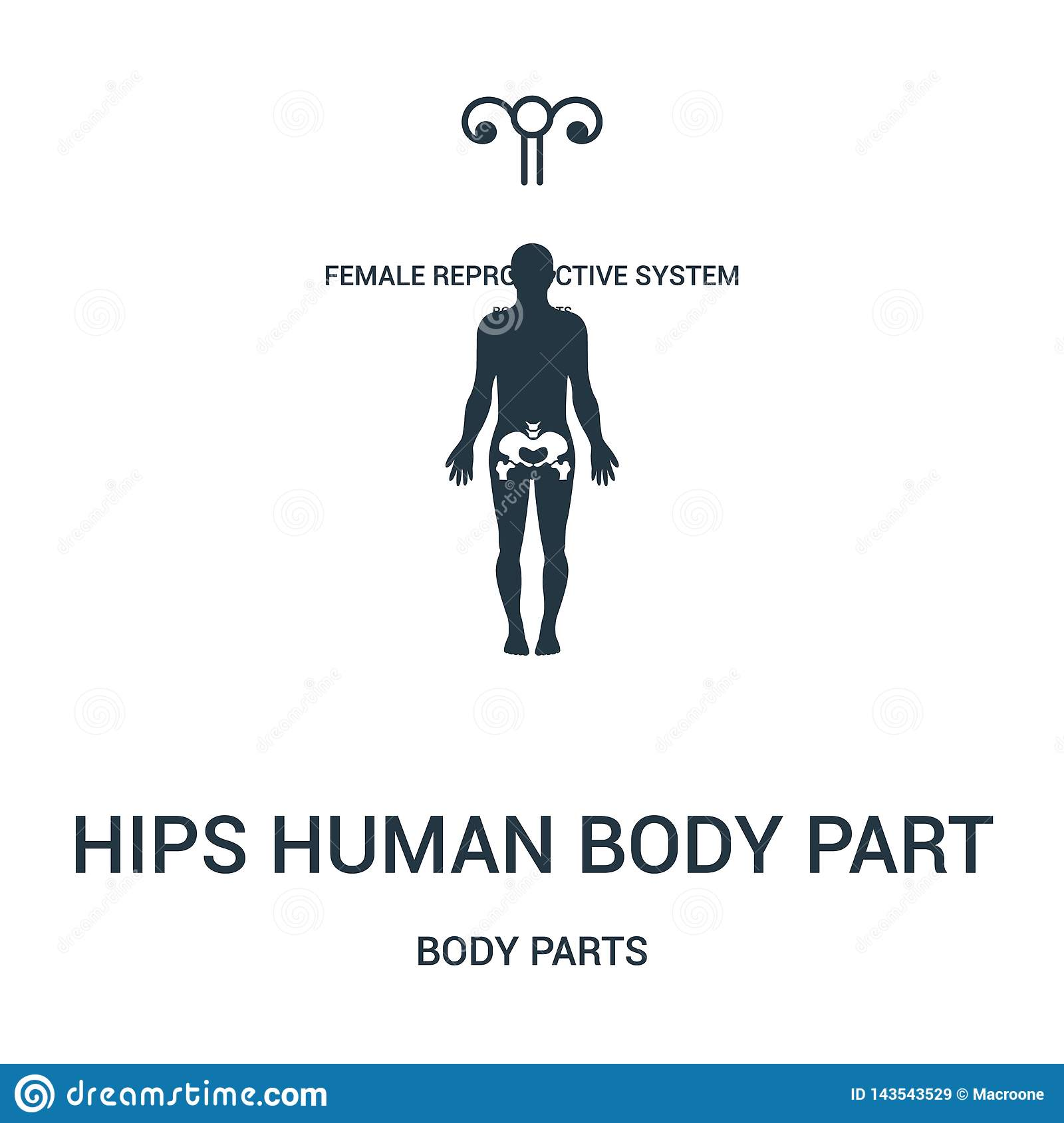 Hips Human Body Part Icon Vector From Body Parts Collection  Thin