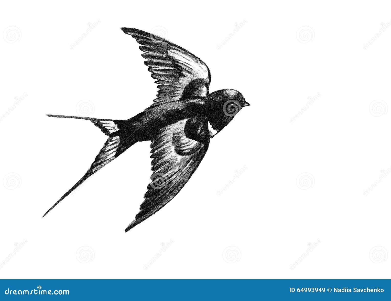 Hirondelle pilotant le dessin noir et blanc illustration - Dessin noir et blanc ...