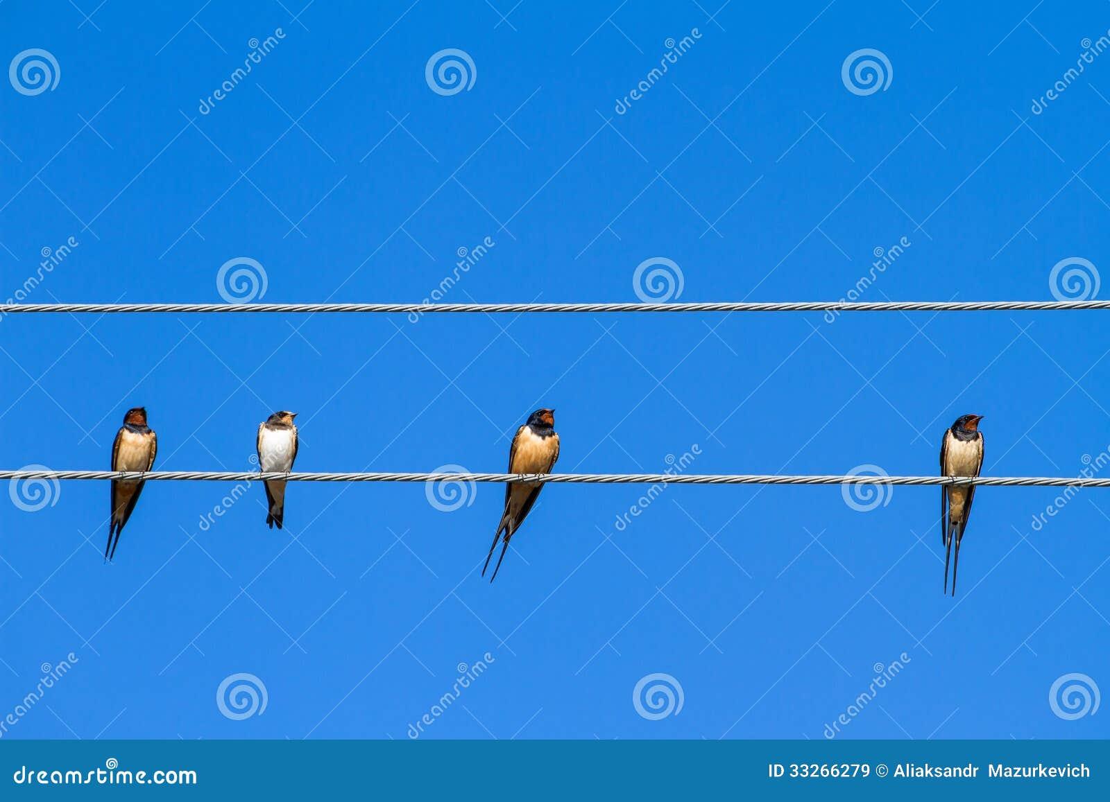 Hirondelles se reposant sur un fil