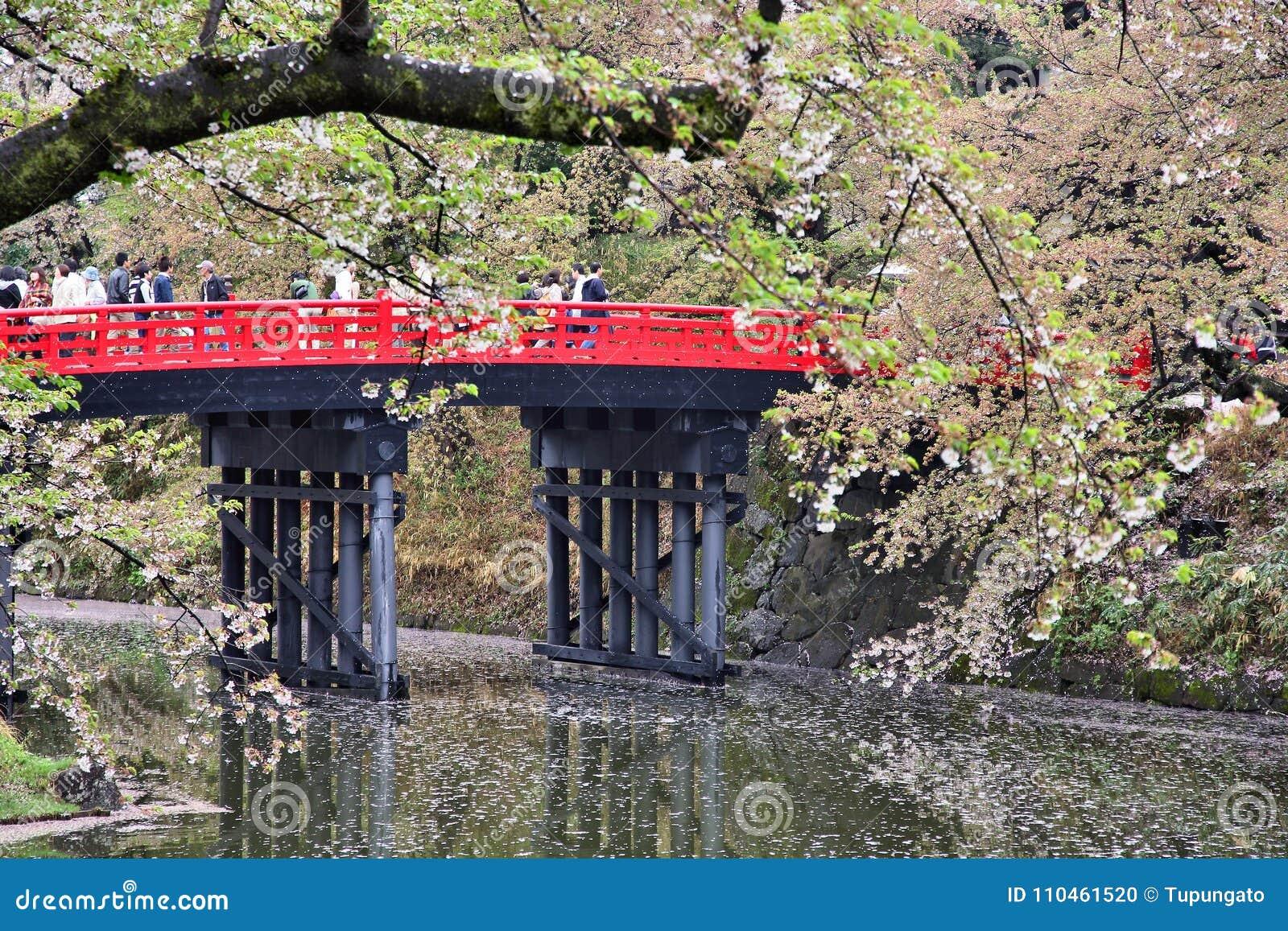 Hirosaki körsbärsröd blomning