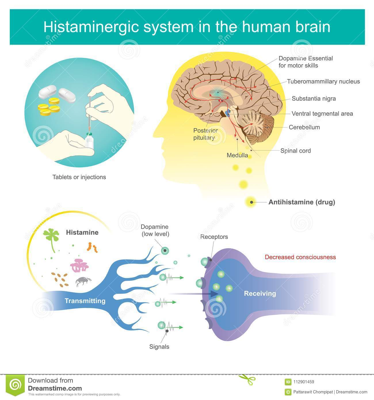 Histaminergic system in the human brain histamine illustration download comp ccuart Image collections