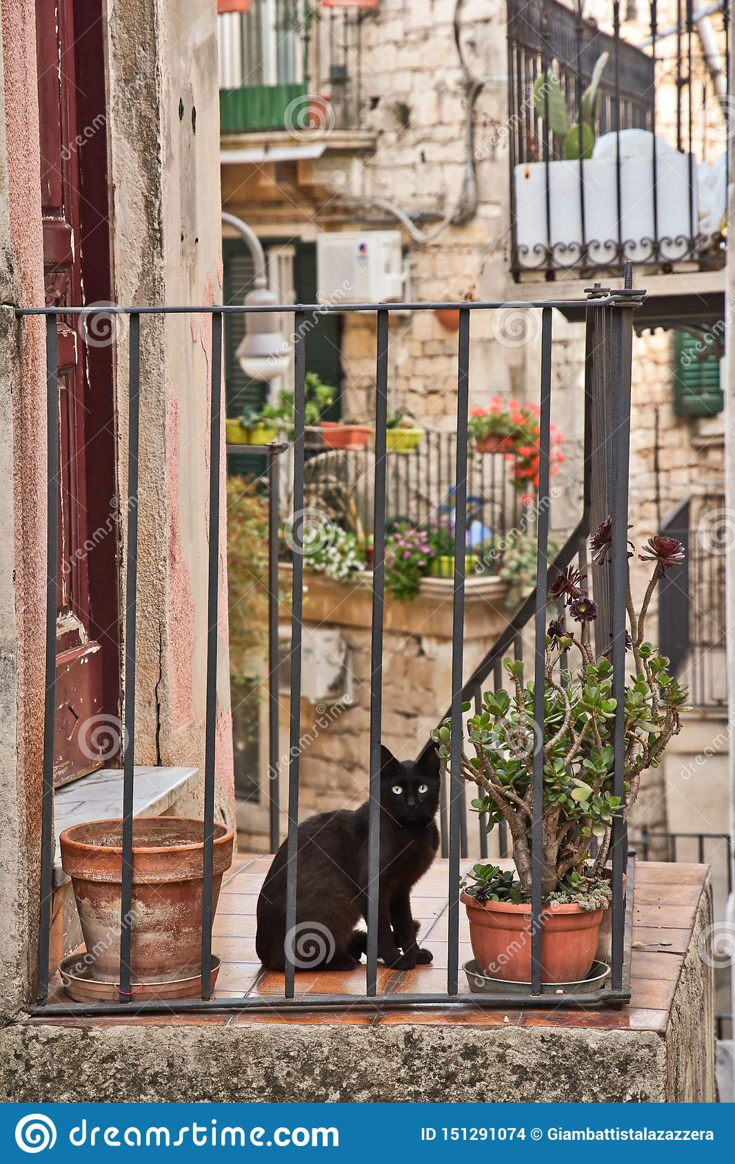 An cat in the village of Modica in Italy.