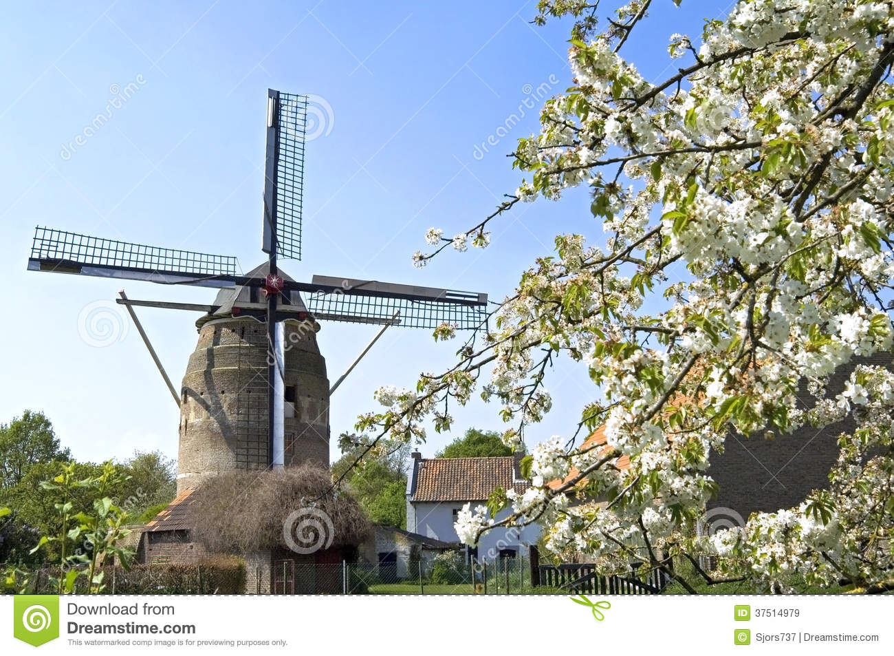 c5c87efdcb9f63 Netherlands, province Limburg, Gronsveld village, municipality Eijsden- Margraten. Blossom Tree for the tower mill. This early 17th century mill  was built by ...