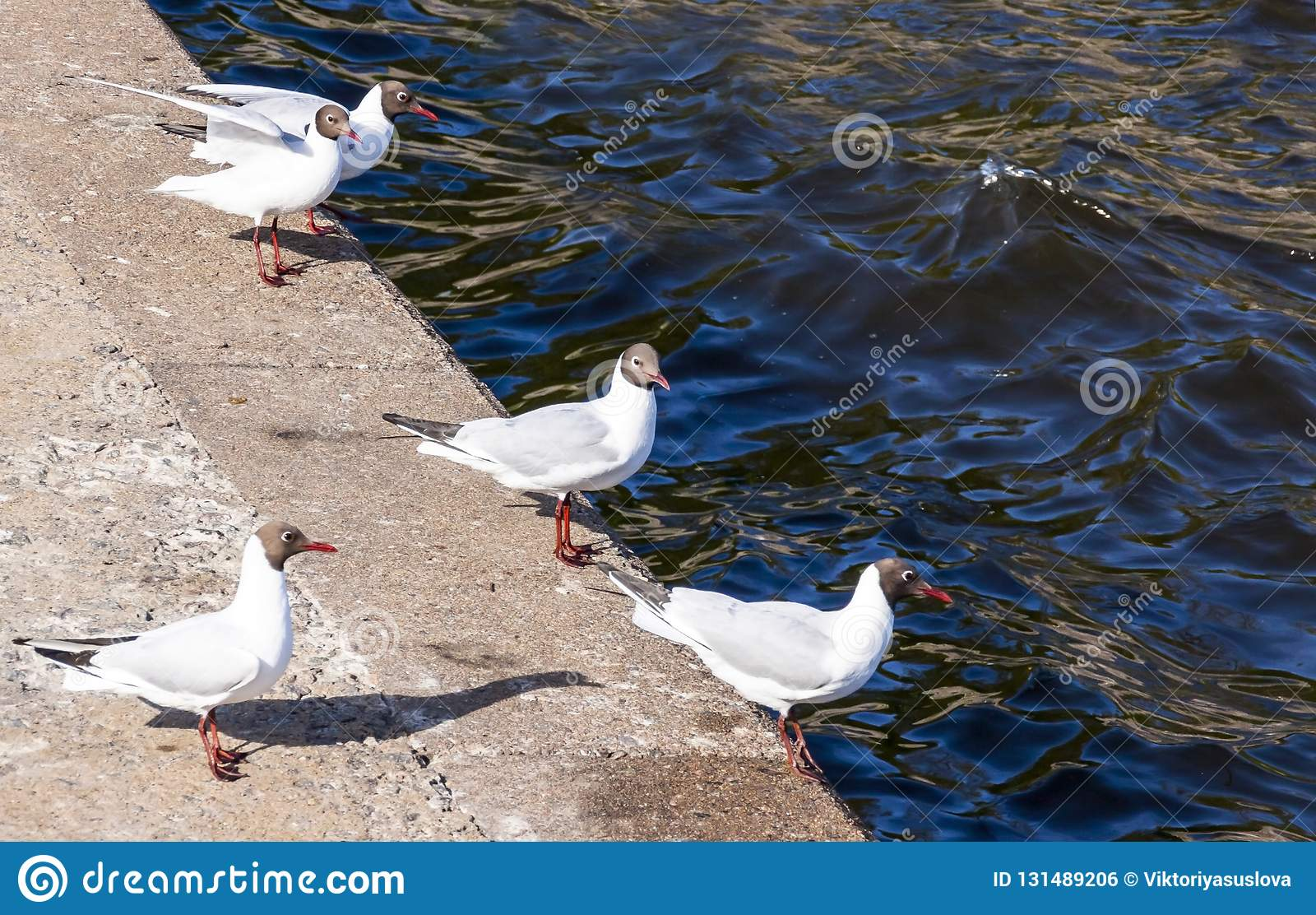 Seagulls on parapet near the Gulf of Finland in Kronstadt