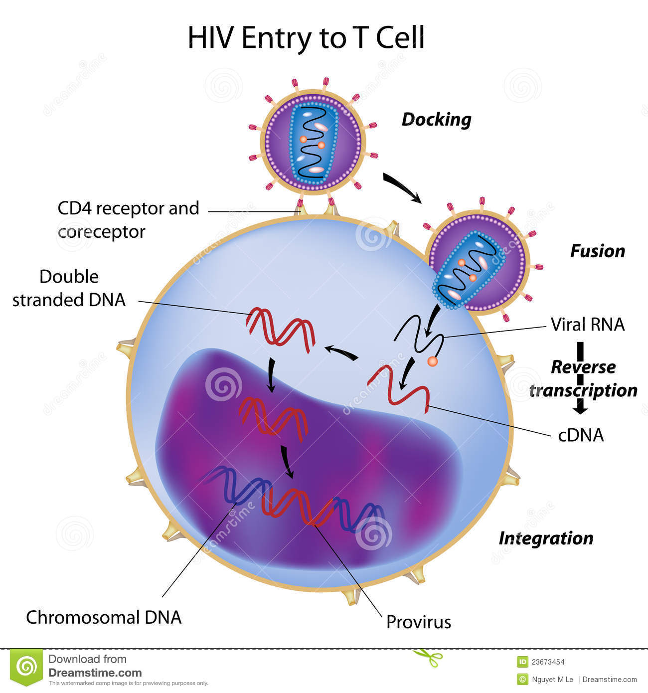 Hiv entry to t cell stock vector illustration of blood 23673454 download comp ccuart Choice Image
