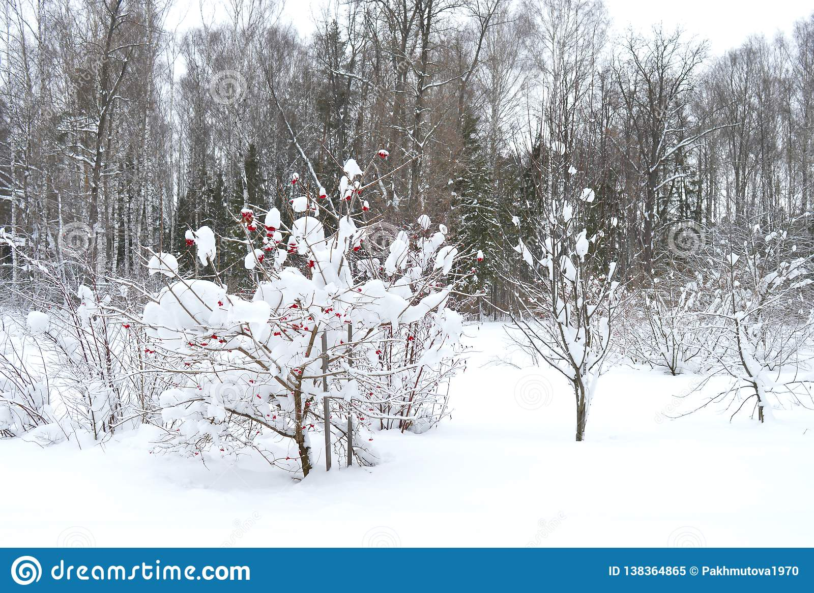 Hiver Neige Arbre Paysage Froid Foret Nature Blanc