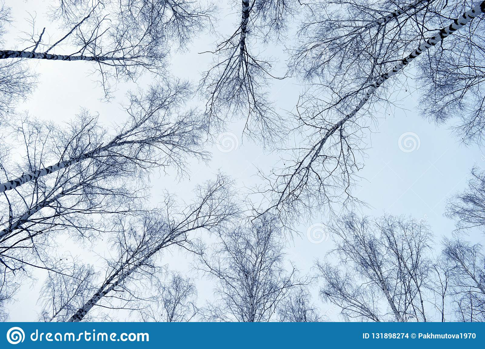 Hiver Neige Foret Arbre Froid Nature Arbres Paysage