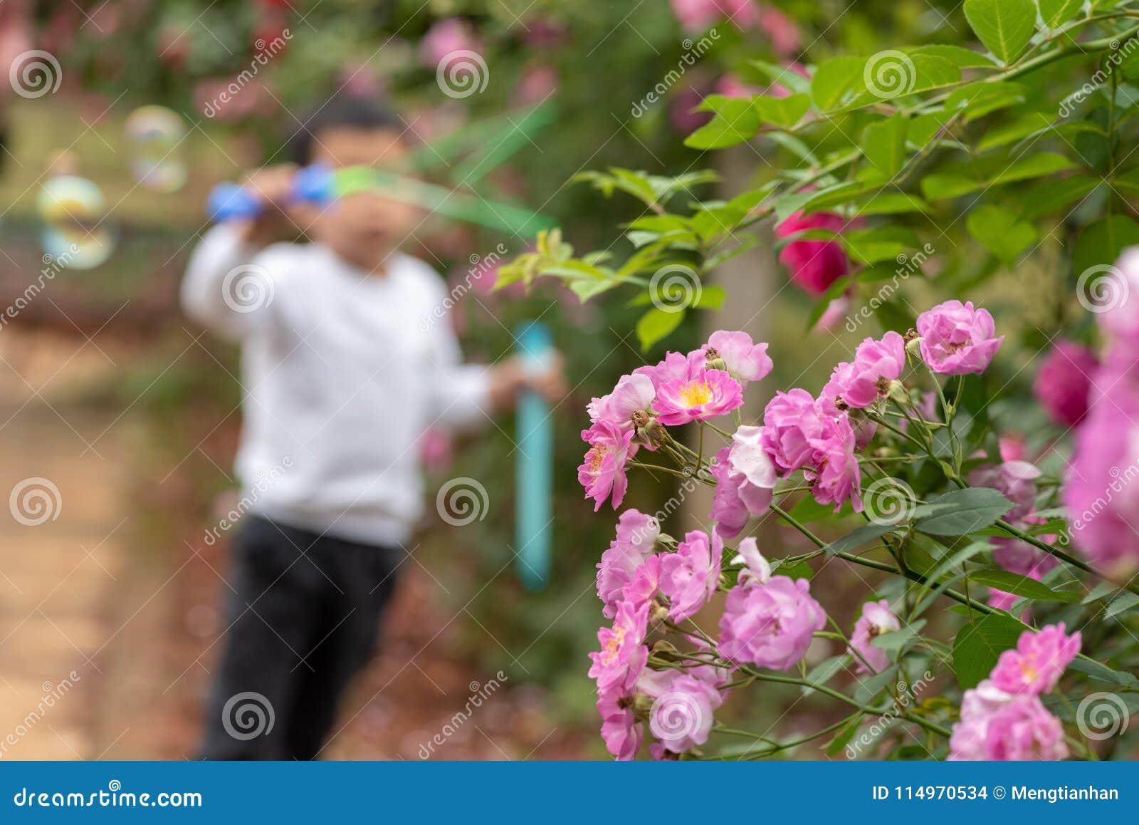 Hiver prune-Rosa Jacq chinensis