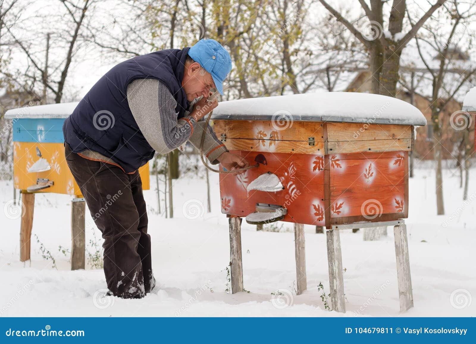 Hiver sur le rucher L hiver d apiculteur surveille le statut des abeilles dans la ruche Abeilles d hiver dans les ruches dans la