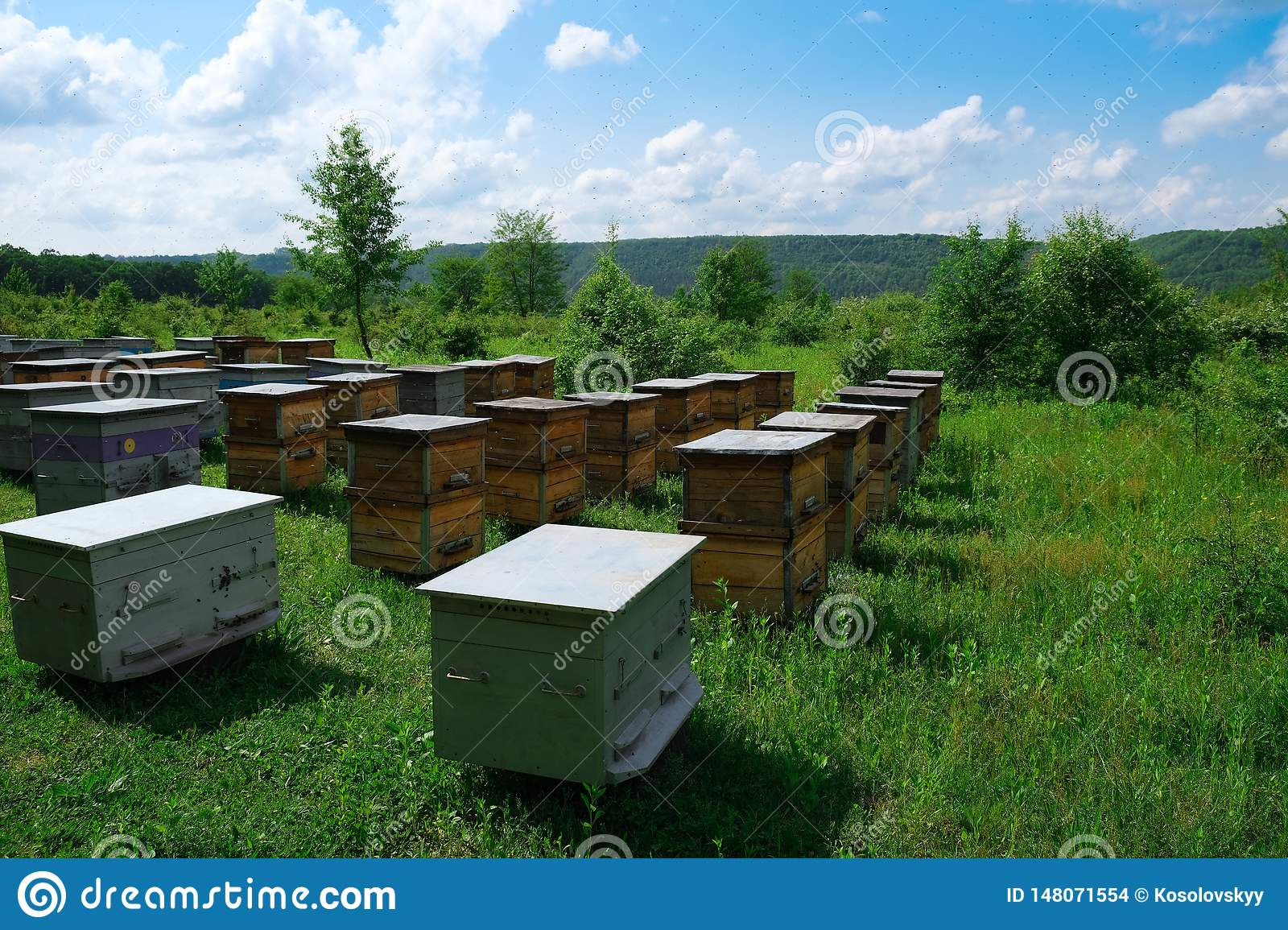 Hives In An Apiary With Bees Stock Photo - Image of grass