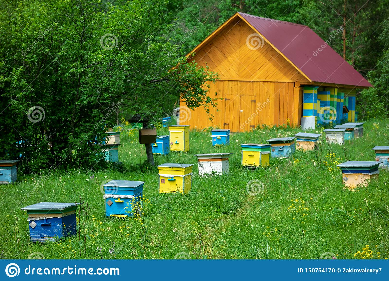 Bee Hives Houses On The Apiary Stand On A Hill In Front Of