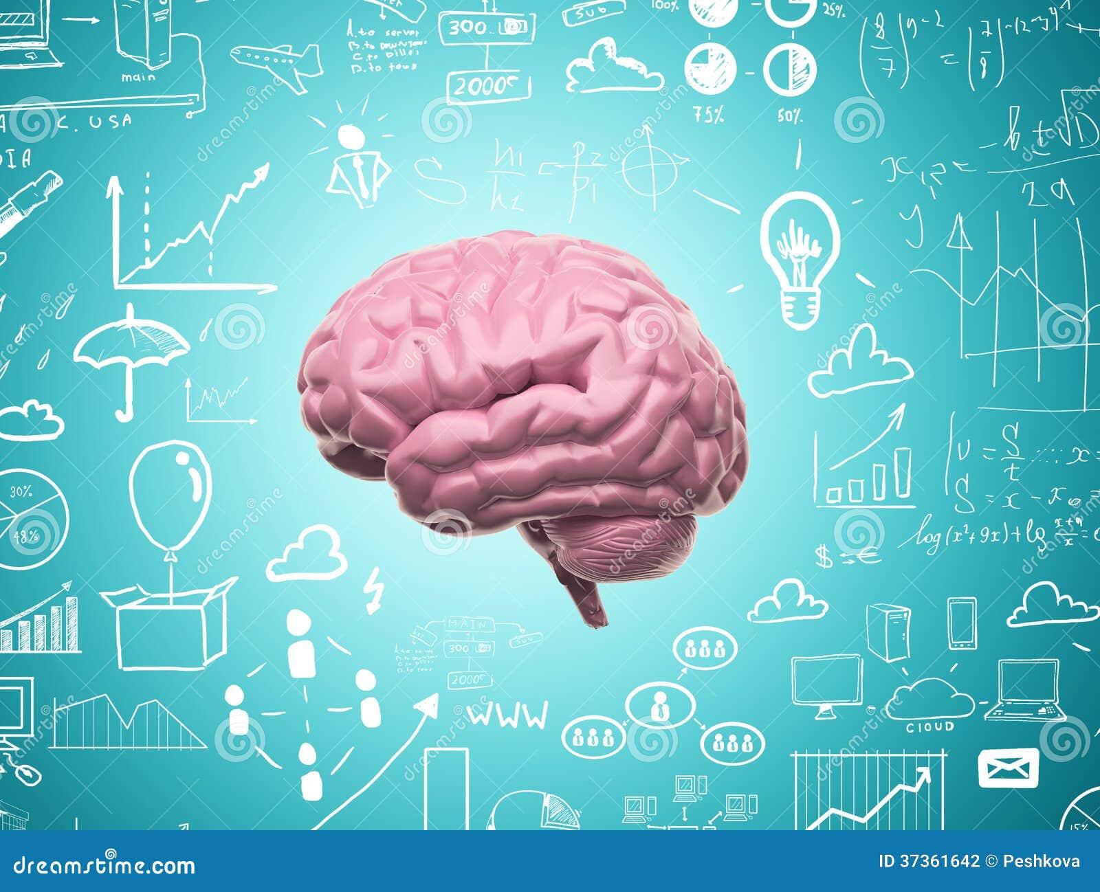 Hjärna 3d