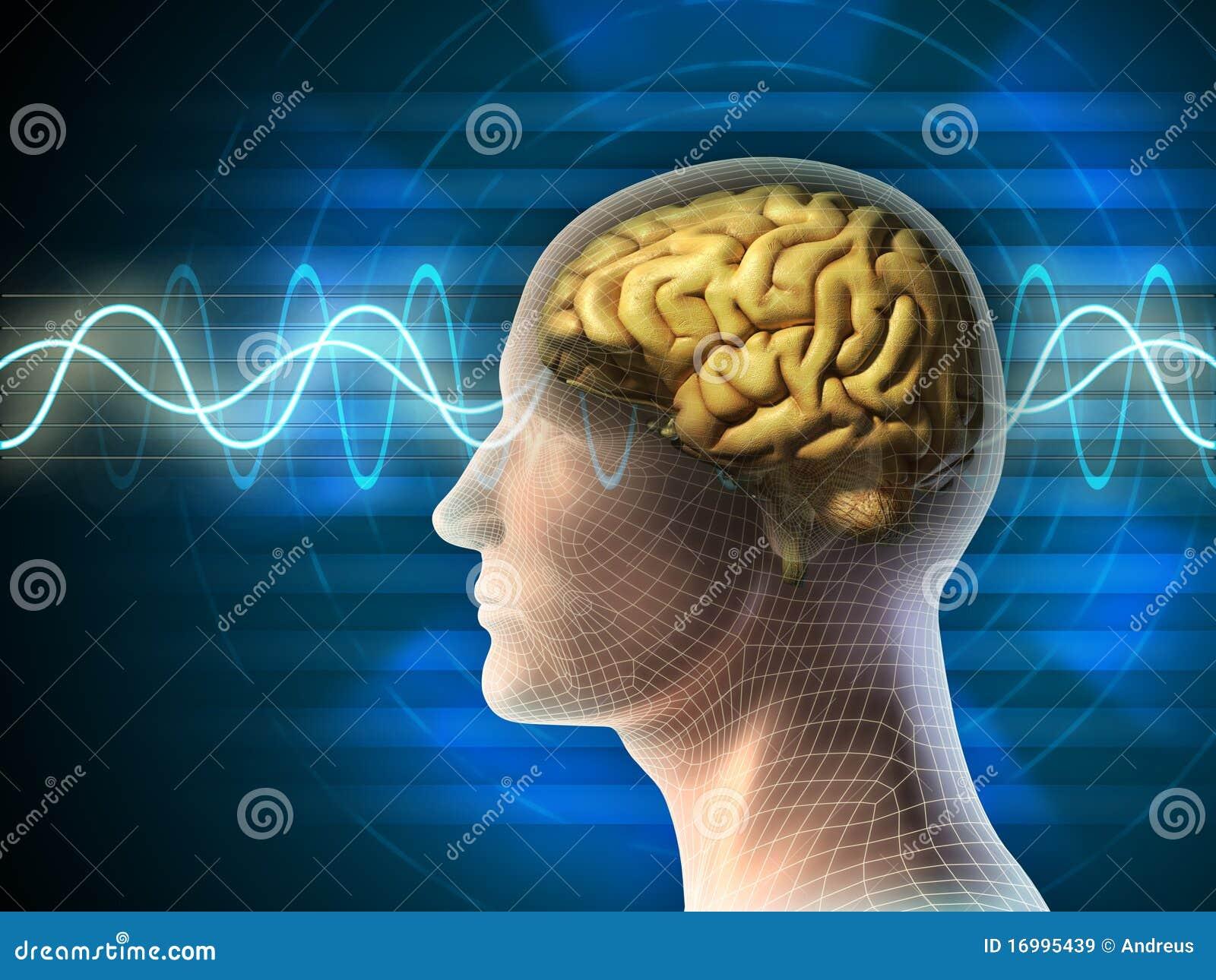 Hjärnwaves