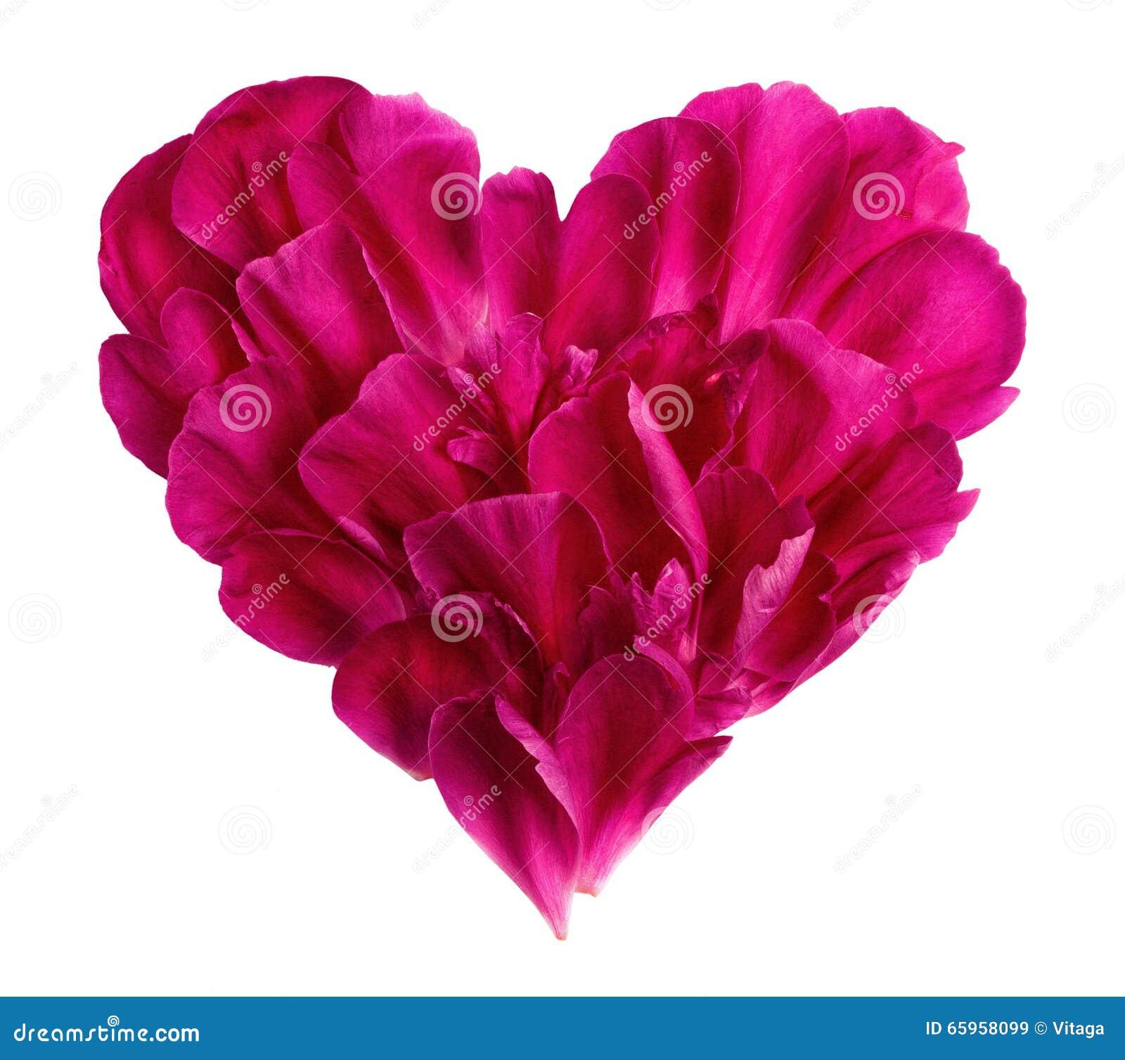 Hjärta från kronbladen av en blomma