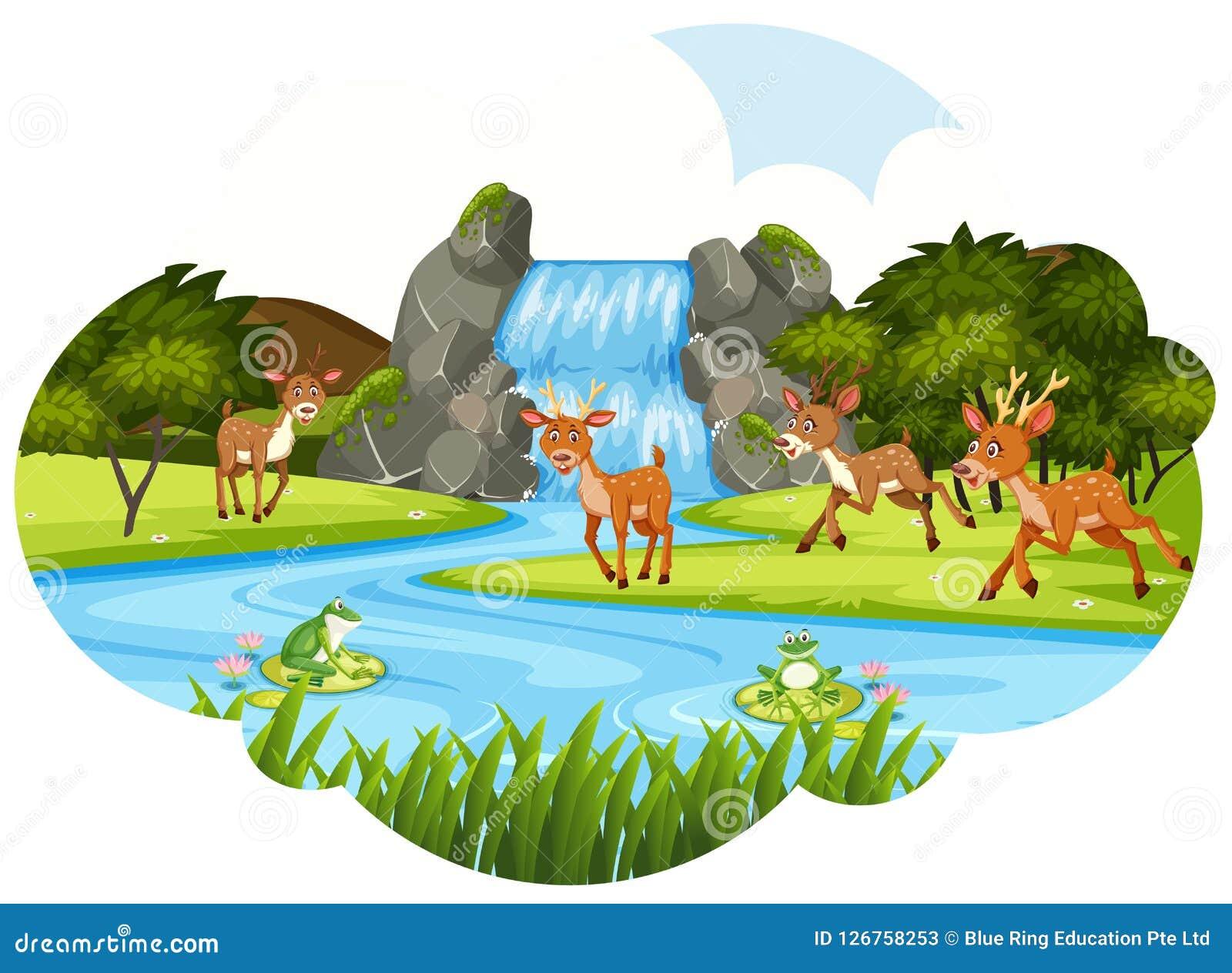 Hjortar på vattenfallet