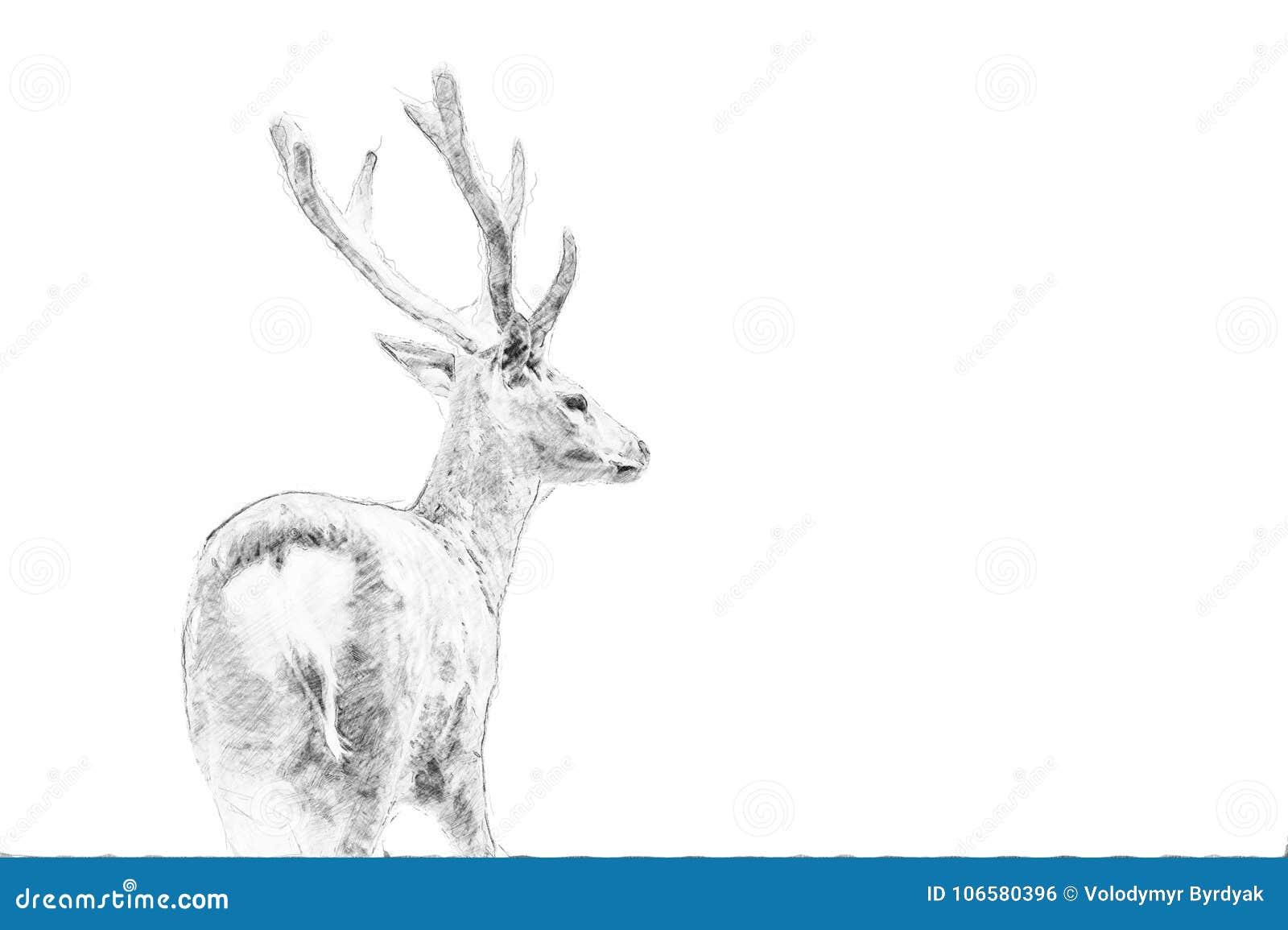 Hjortar Skissa med blyertspennan