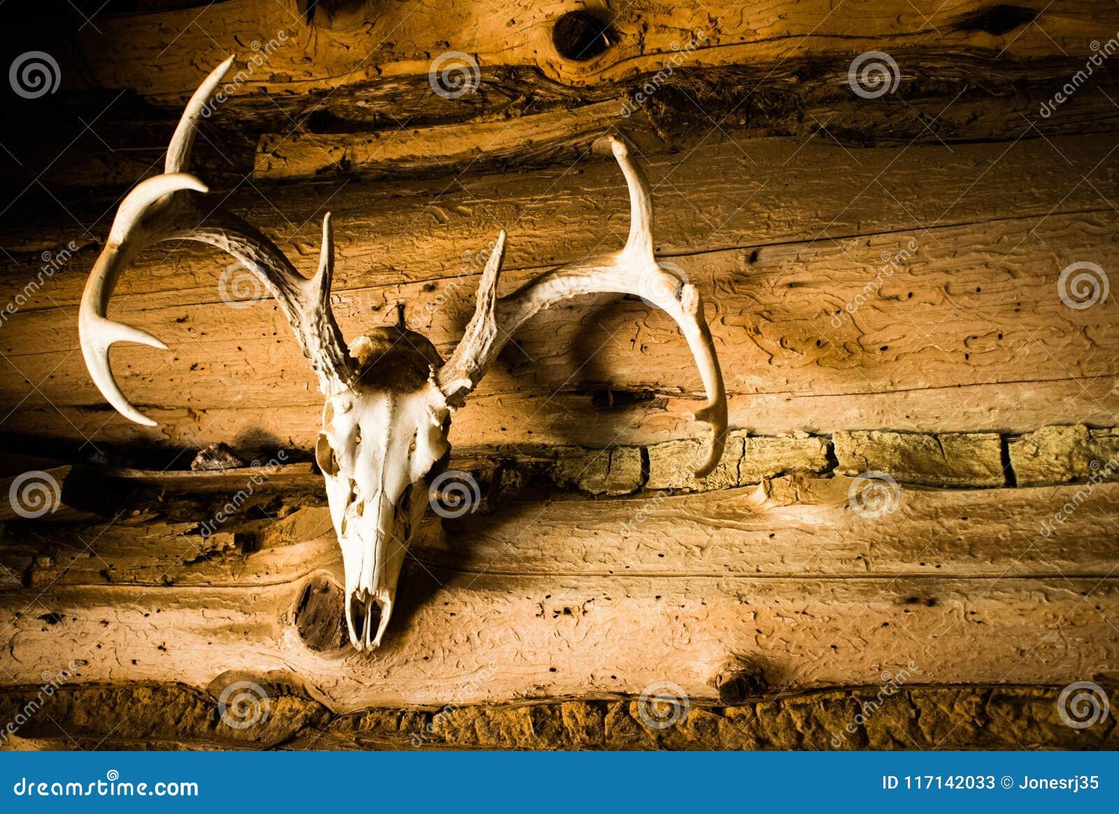 Hjortskalle med horn på kronhjort som vägggarnering