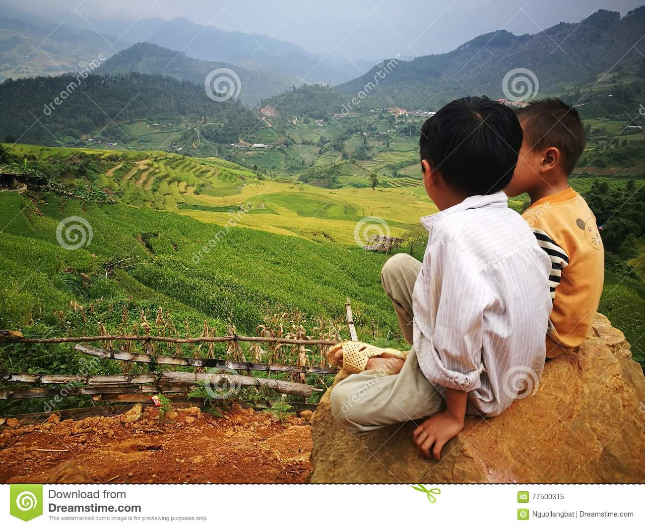 Hmong Miao minority children sitting on a rock at a valley of yellow rice paddy field