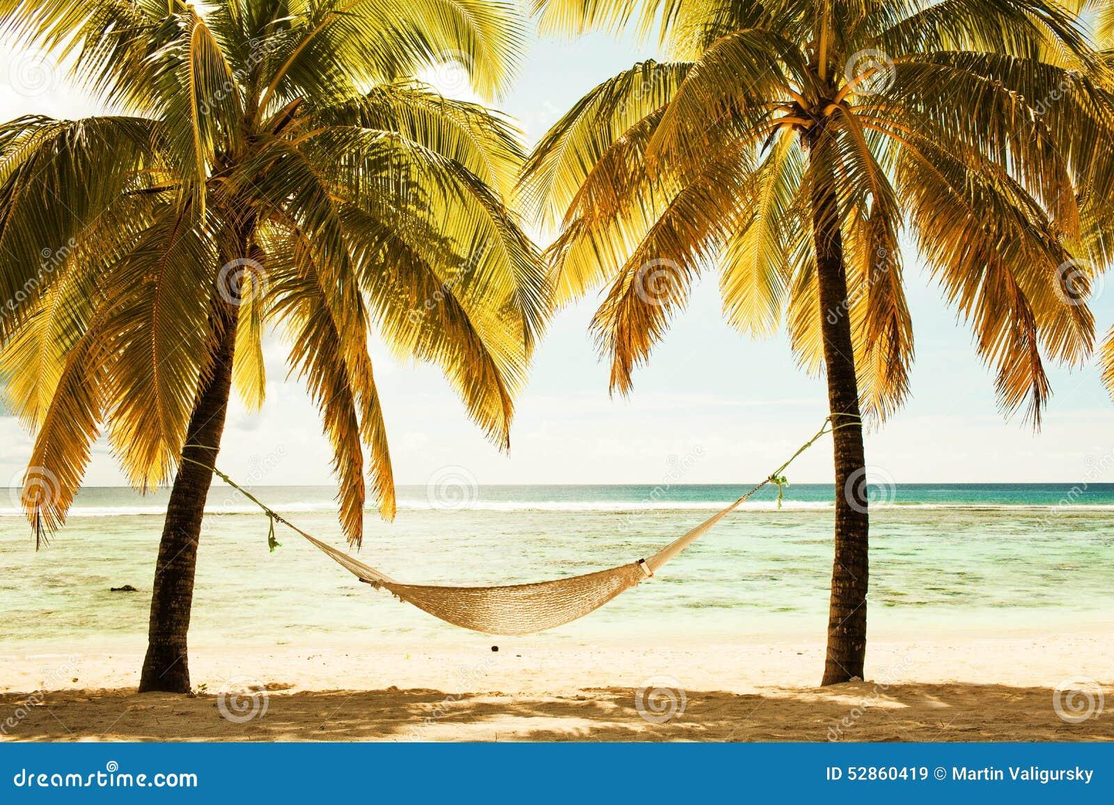 Hängematte Zwischen Zwei Palmen Auf Dem Strand Während Des ...