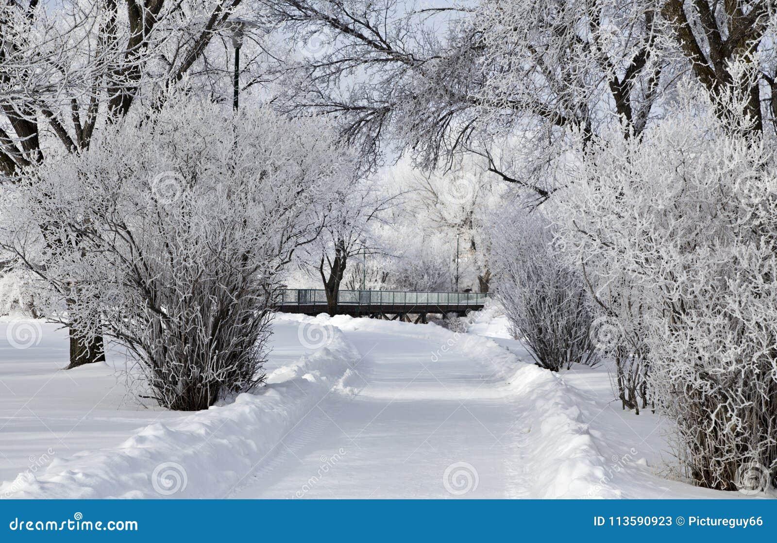 Hoar-Frost-Grasland