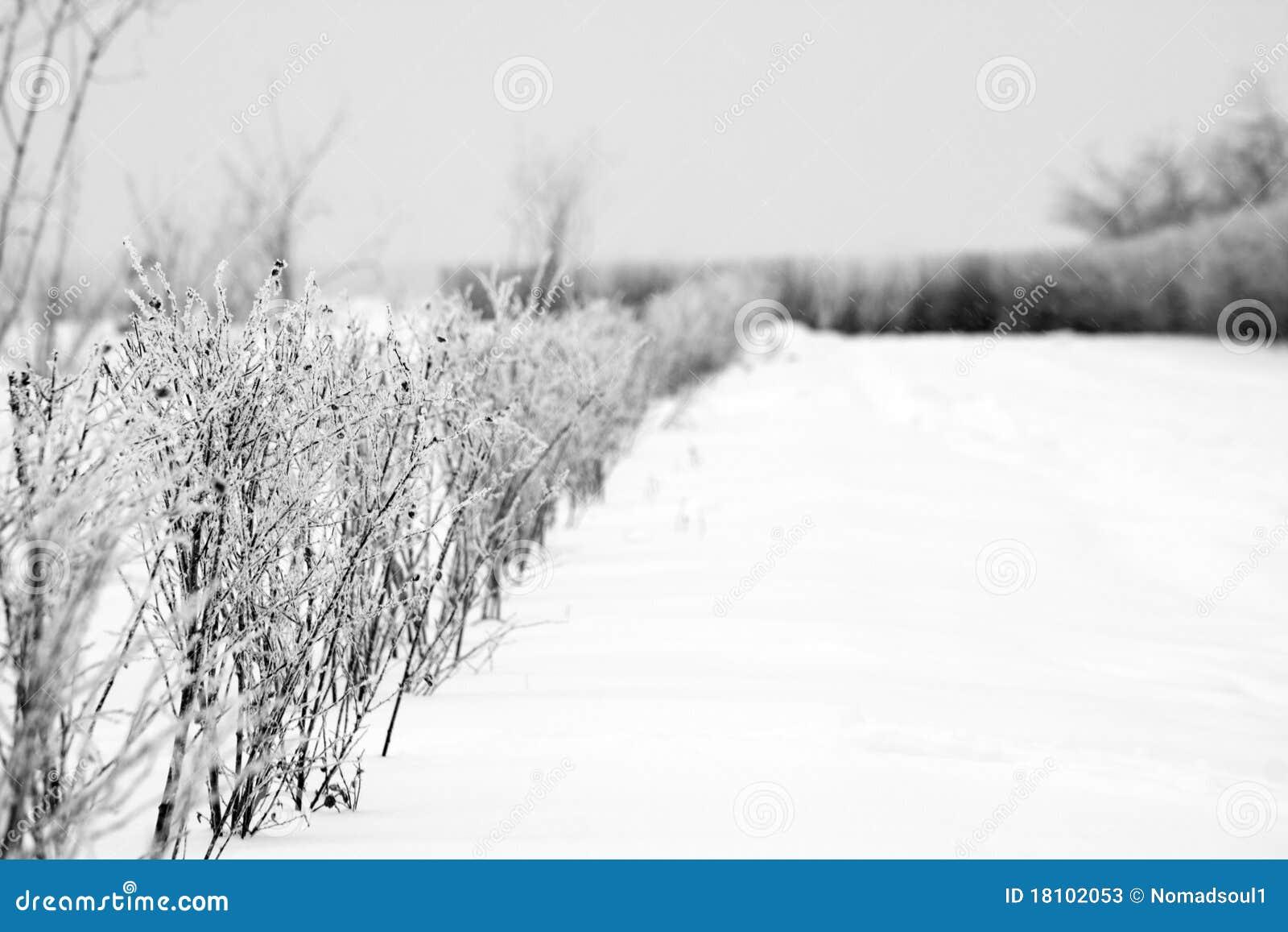 Hoarfrost изгороди
