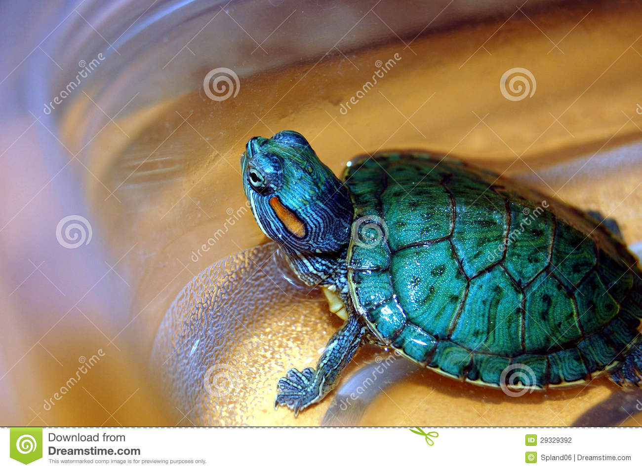 Keeping a pet turtle as a hobby.