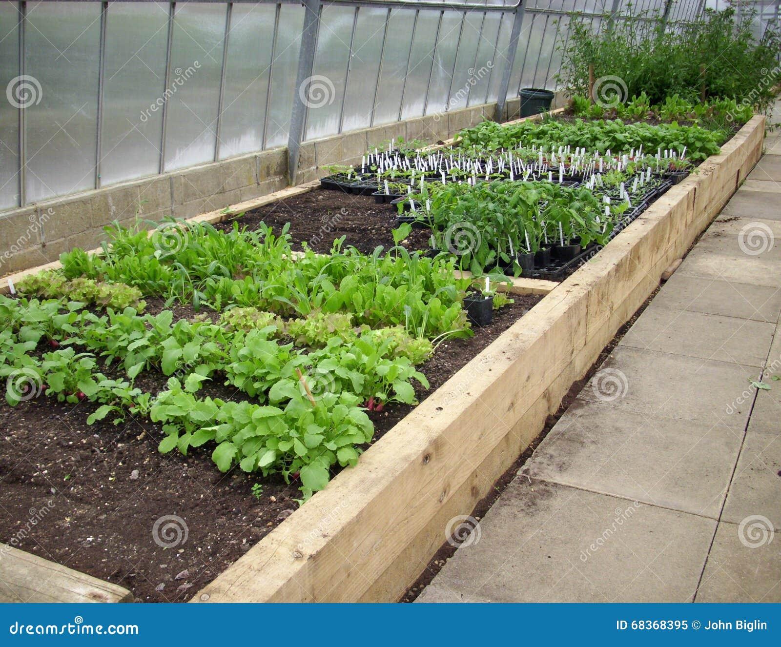 Hochbeete Im Gewachshaus Stockbild Bild Von Salat Errichten 68368395