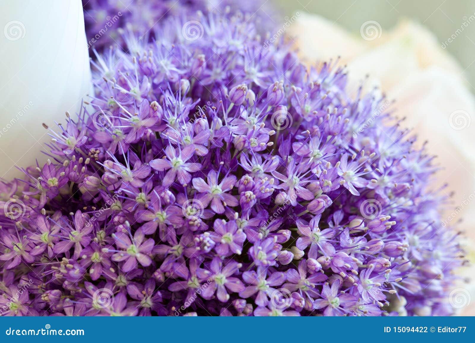 Hochzeits Blumen Dekoration Malvenfarbenes Liliac Stockfoto Bild