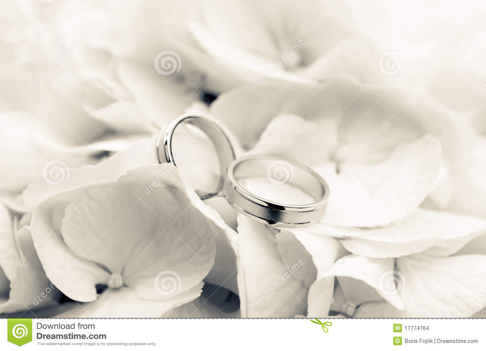 Hochzeits Ringe Mit Blumen Stockfoto Bild Von Commit 17774764