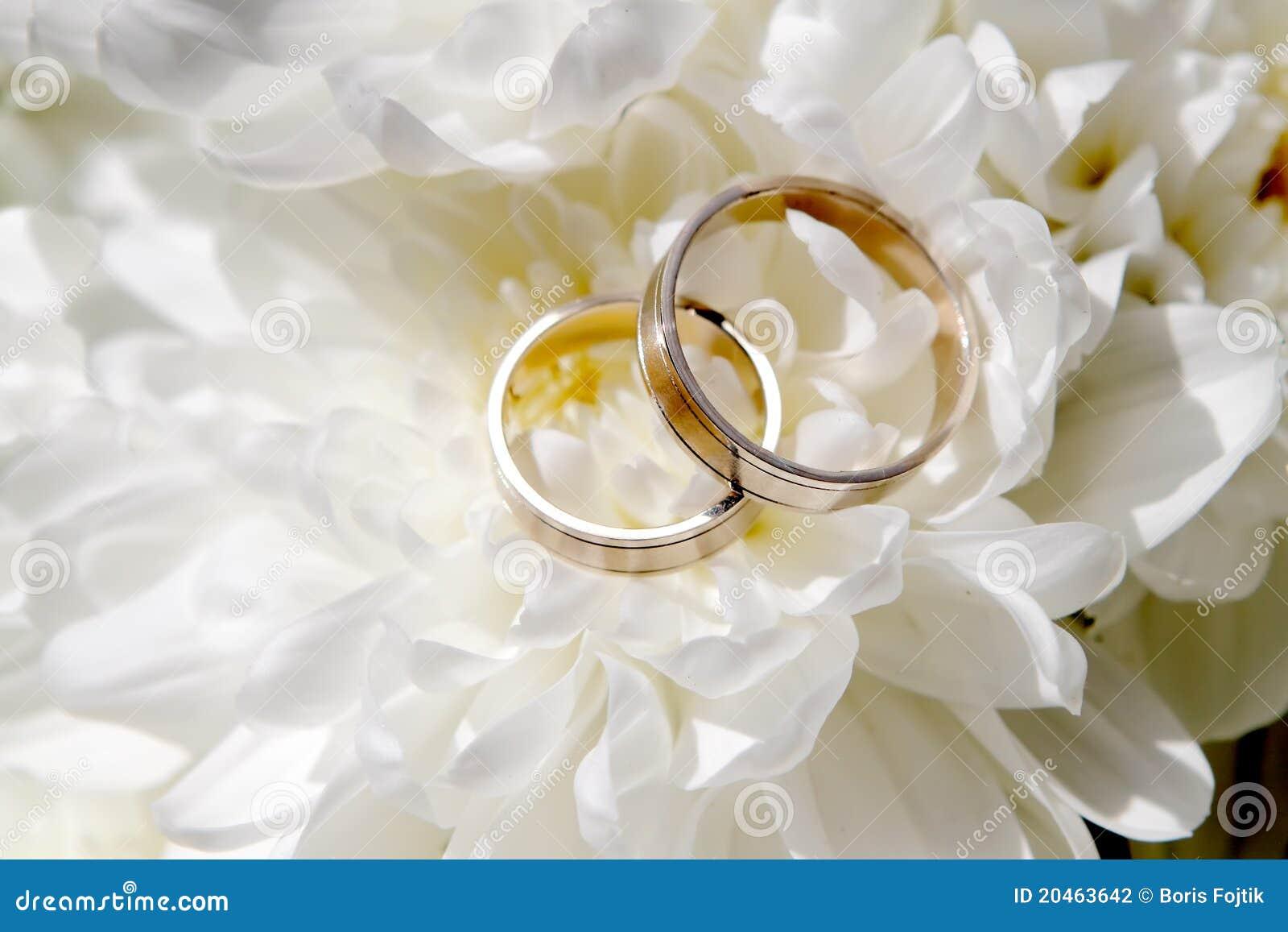 Hochzeits Ringe Mit Blumen Stockfoto Bild Von Bogen 20463642
