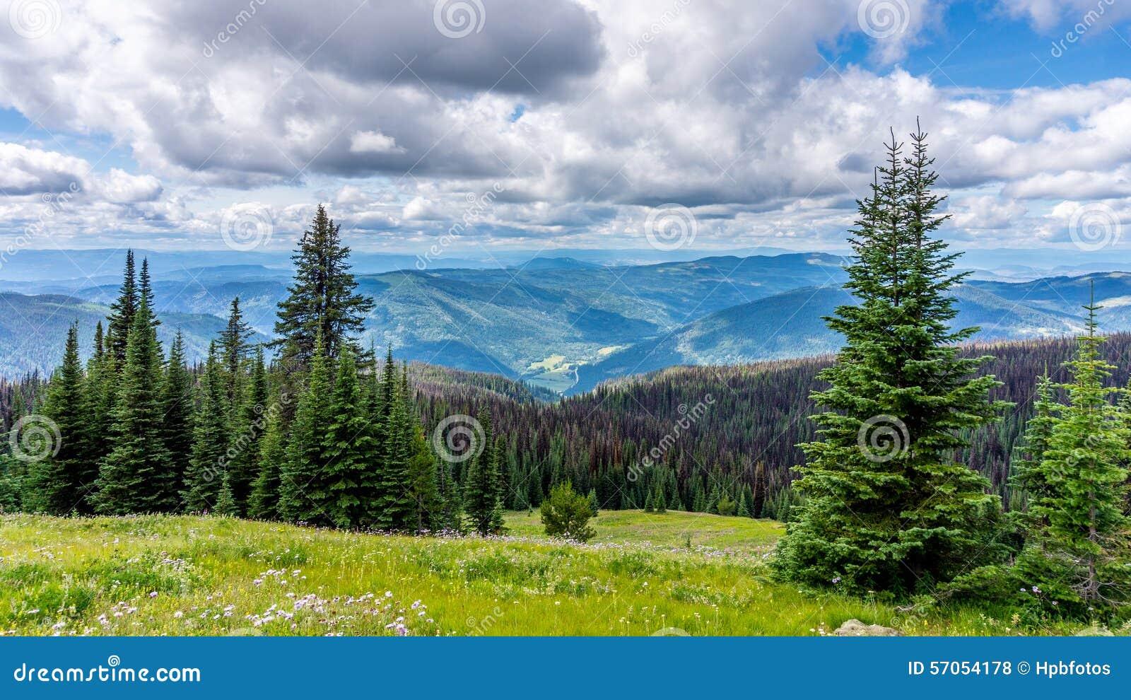 Hoge Alpiene Weiden & Pijnboomkever