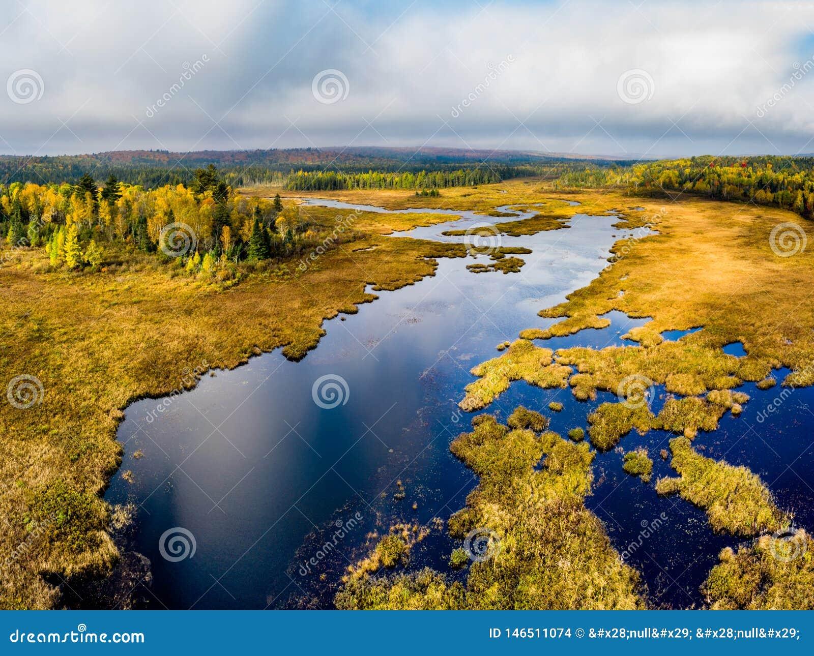 Hoge hoekmening van een gouden moerasland en een Bos