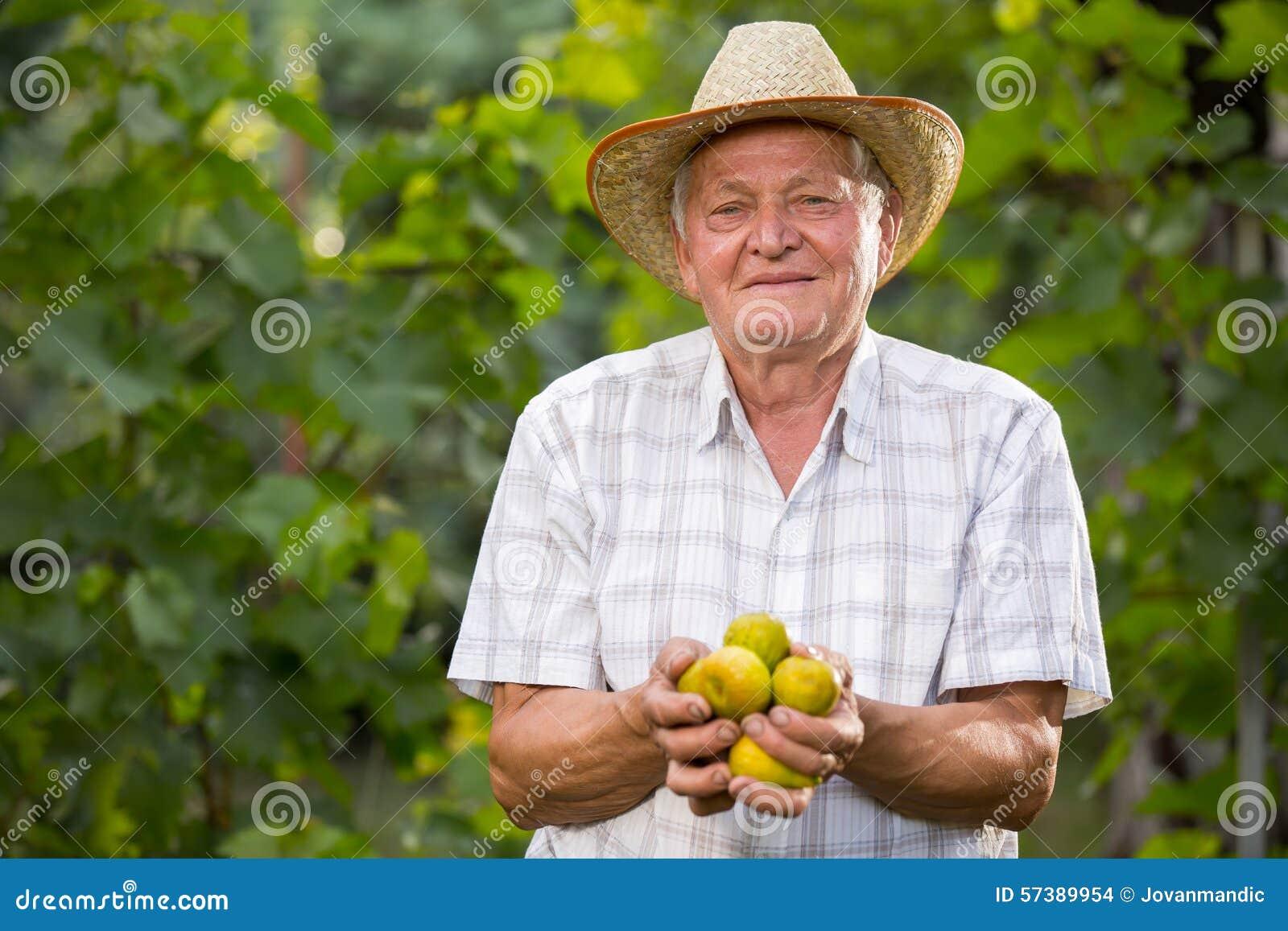 Hogere mens het plukken fig. in een boomgaard