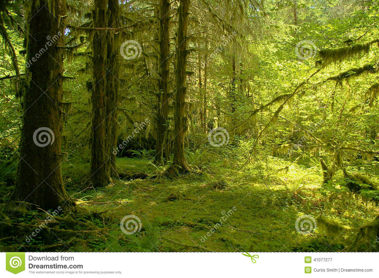 Hoh River Rainforest at Olympic National Park