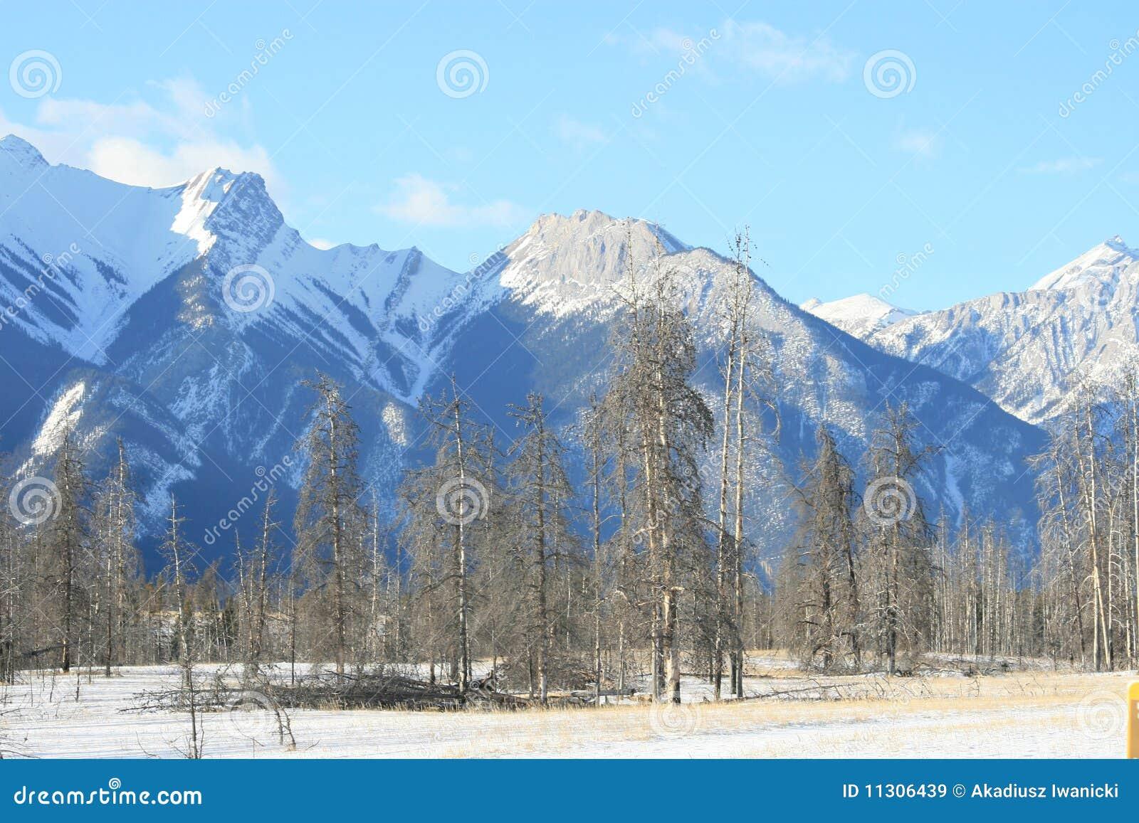 Hohe Berge und toter Wald, Kanada