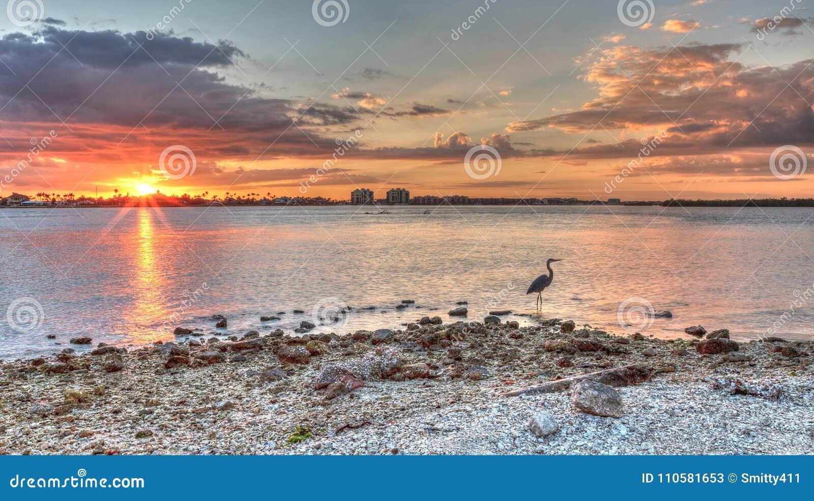 Hohe Graureiher Ardea herodias steht vor einem Sonnenuntergang