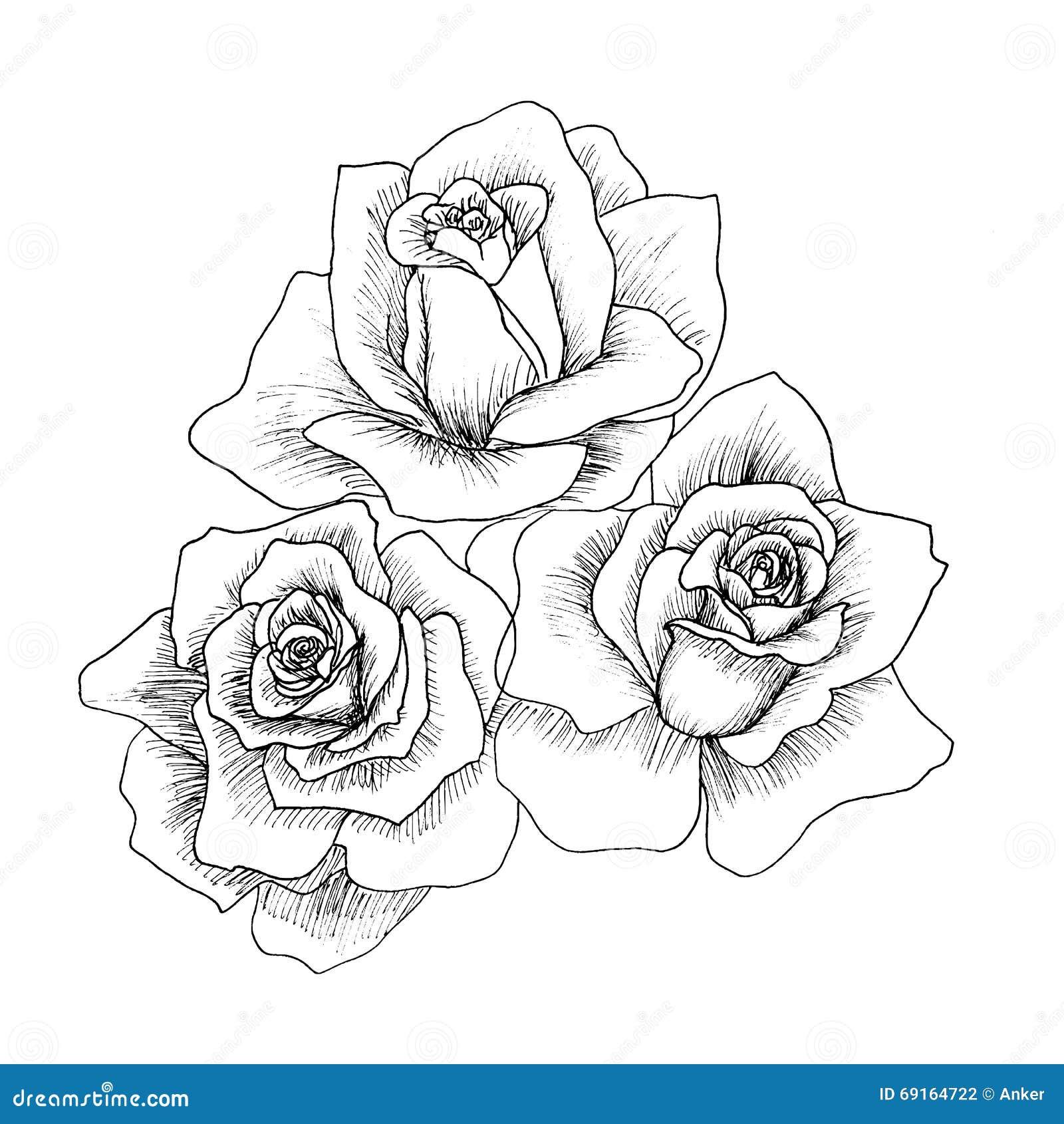 in hohem grade ausf hrliche hand gezeichnete rosen vektor abbildung illustration von stamm. Black Bedroom Furniture Sets. Home Design Ideas
