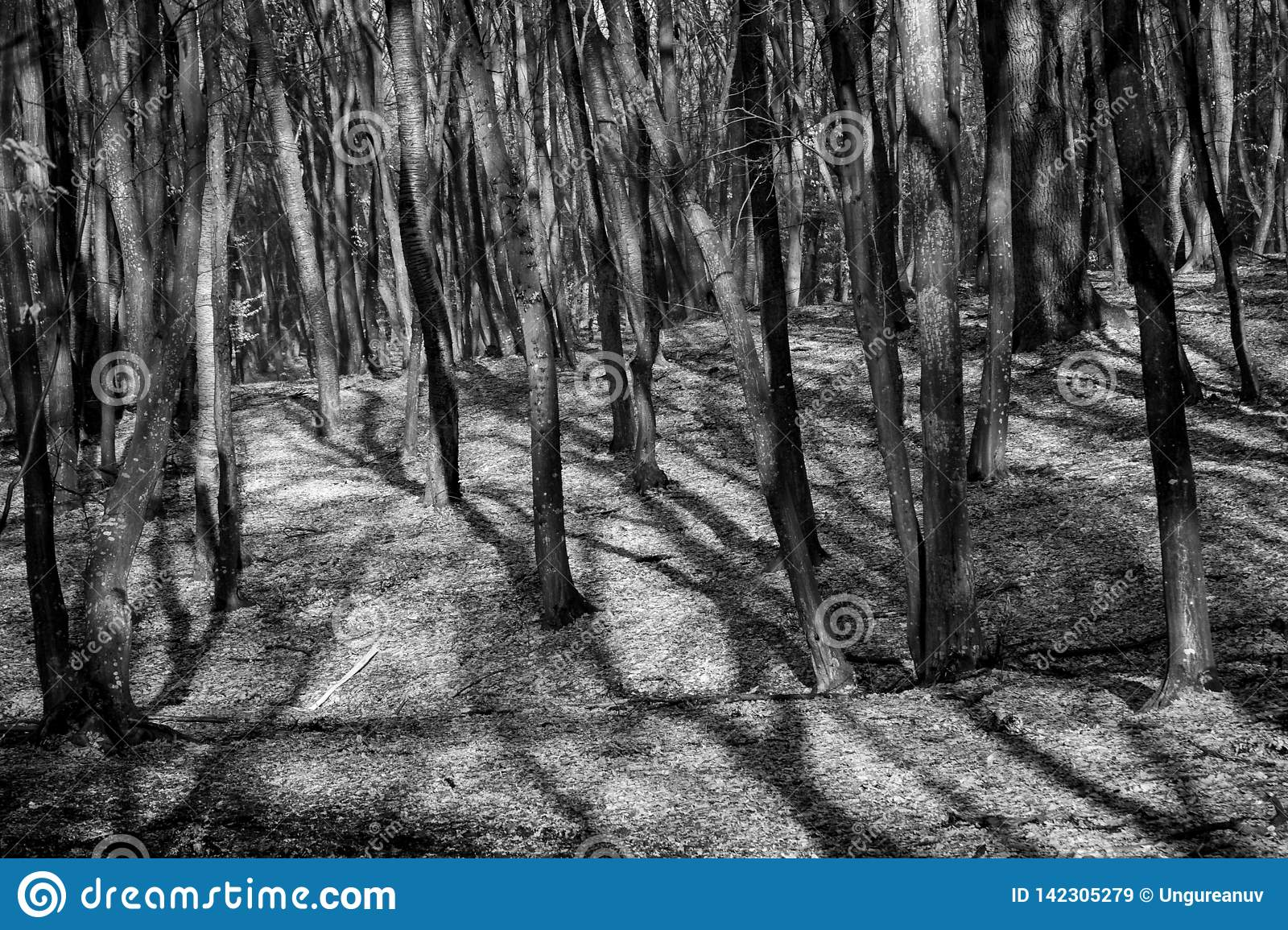 Hoia Baciu Forest - World Most Haunted Forest With A