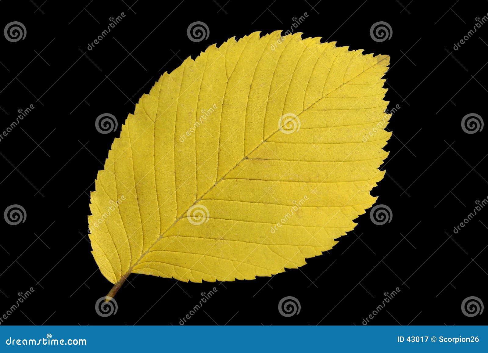 Hoja amarilla del otoño